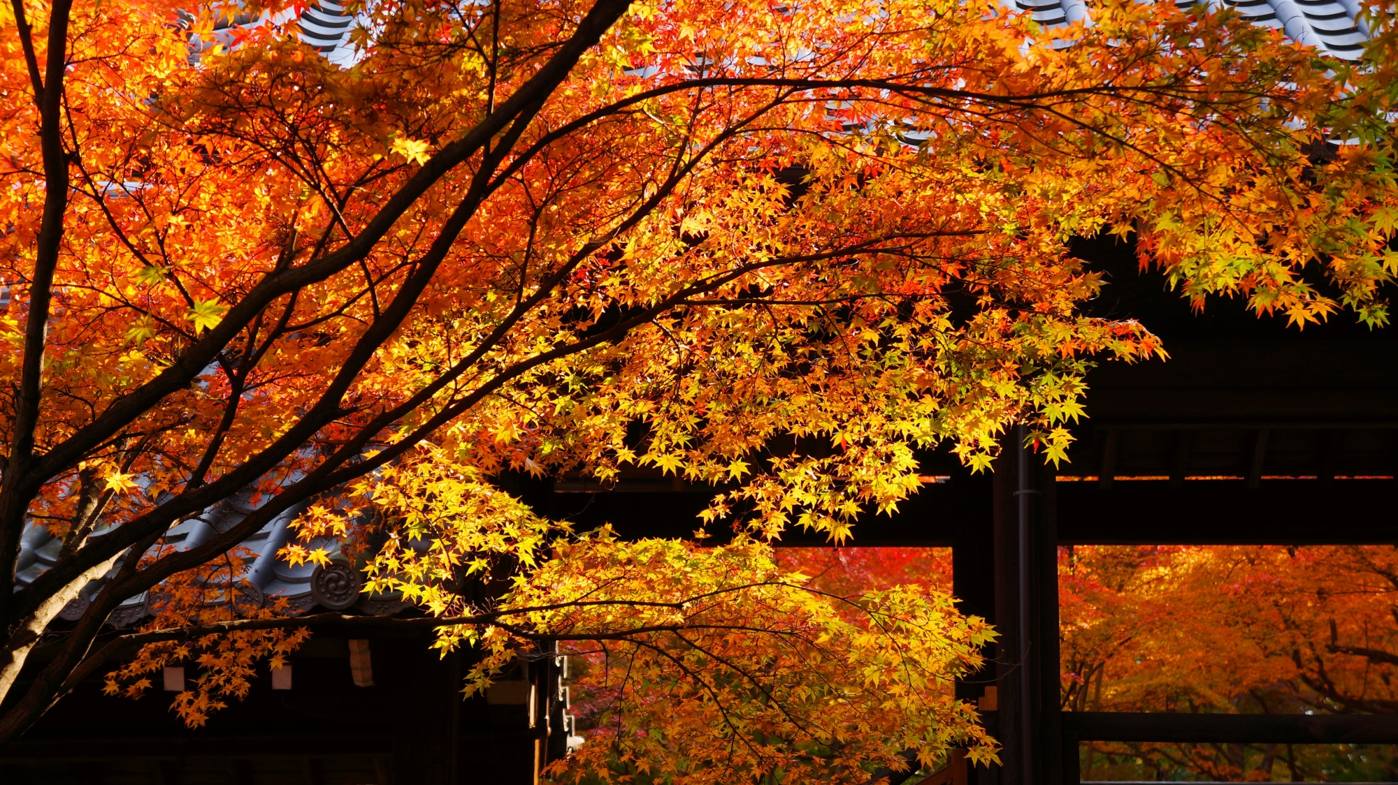 真如堂の奥行きのある華やかな秋の情景