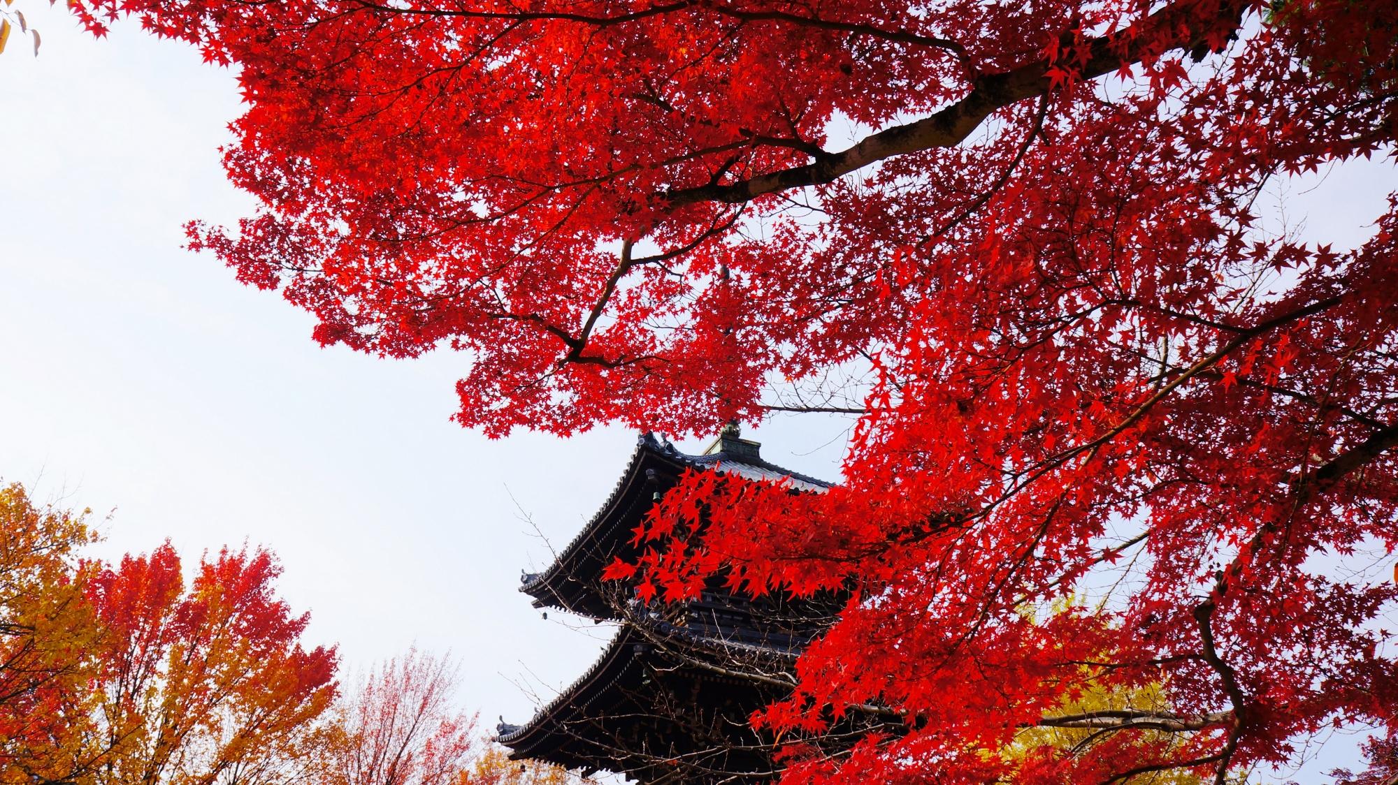 三重塔を見事な秋色に染める紅葉