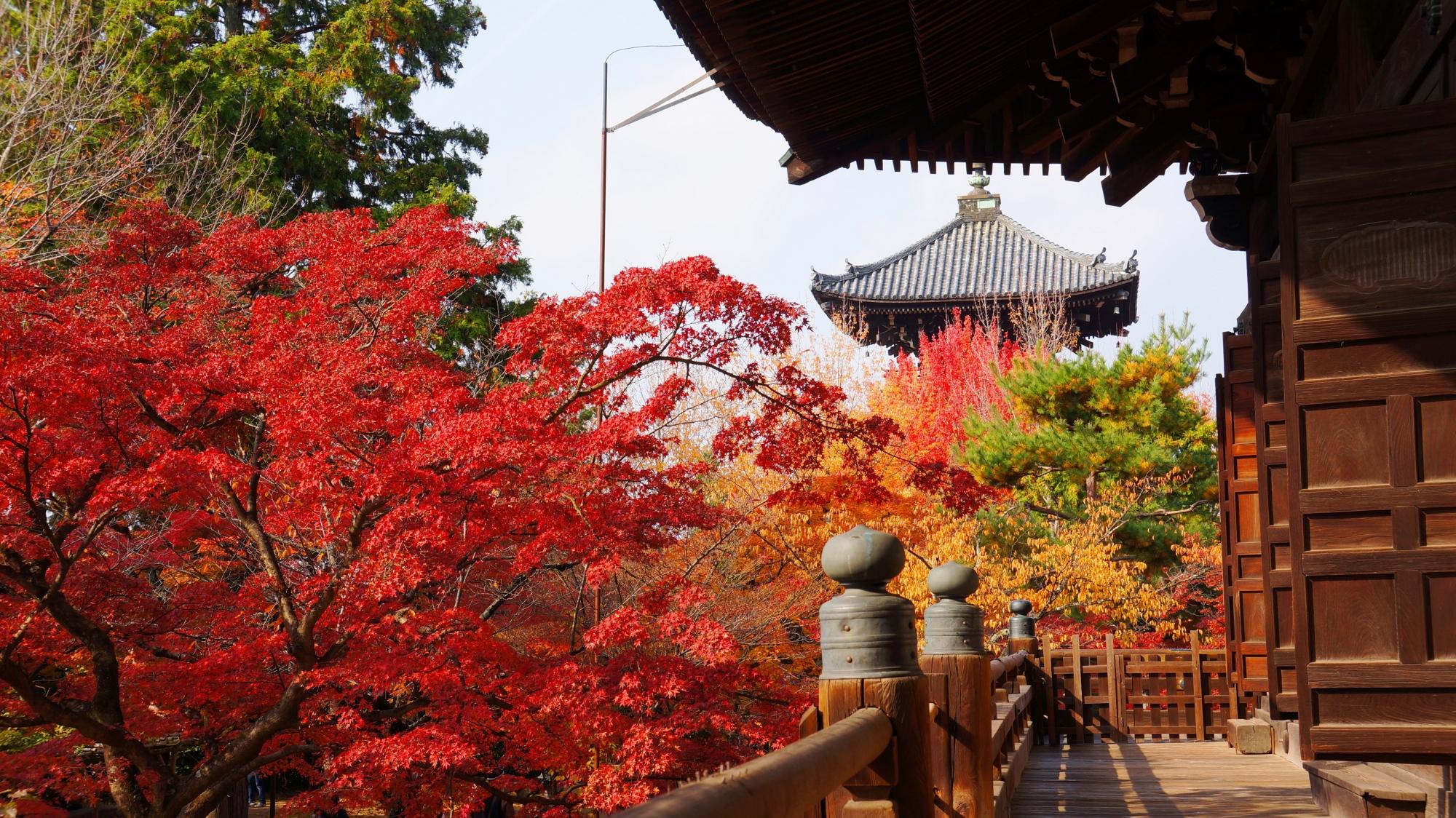 真如堂の本堂から眺めた三重塔と紅葉