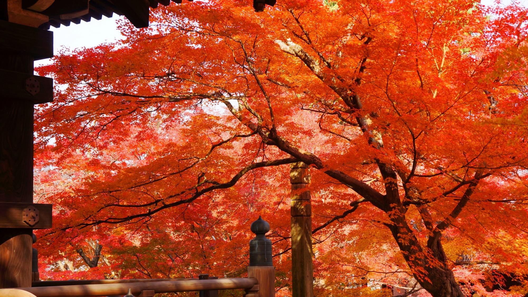 三重塔の下から眺めた圧倒的な紅葉