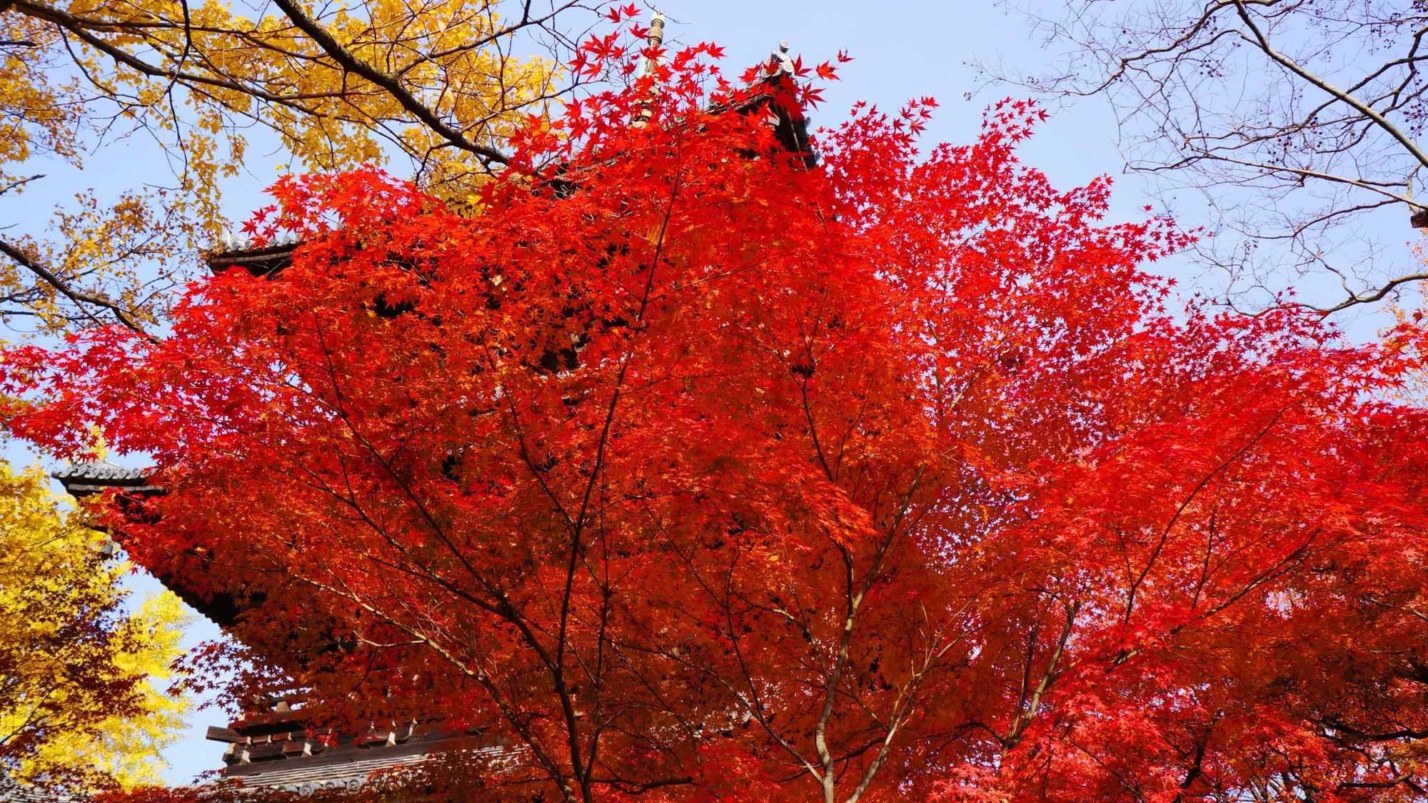 真如堂の素晴らしい秋の彩りと情景