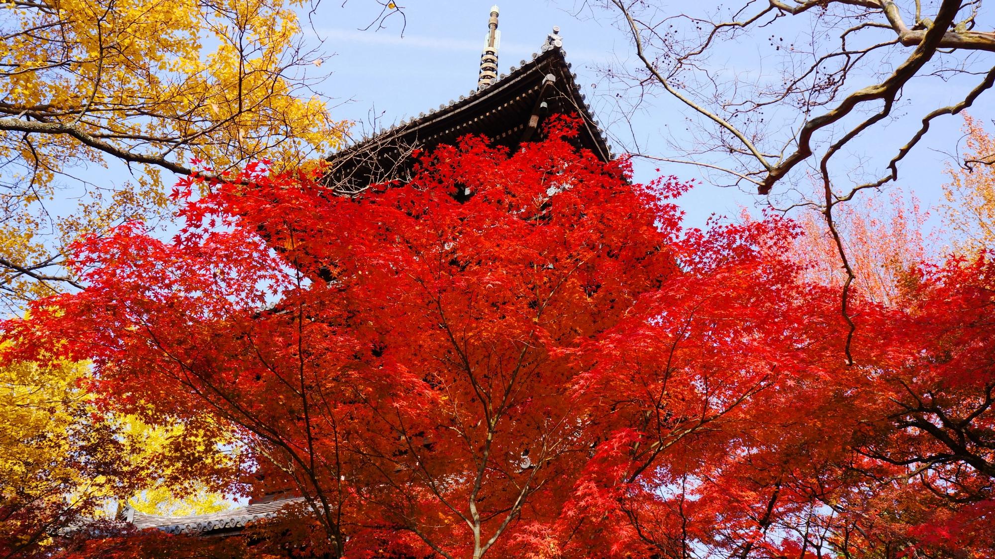 空と伽藍を彩る絶品の紅葉と銀杏