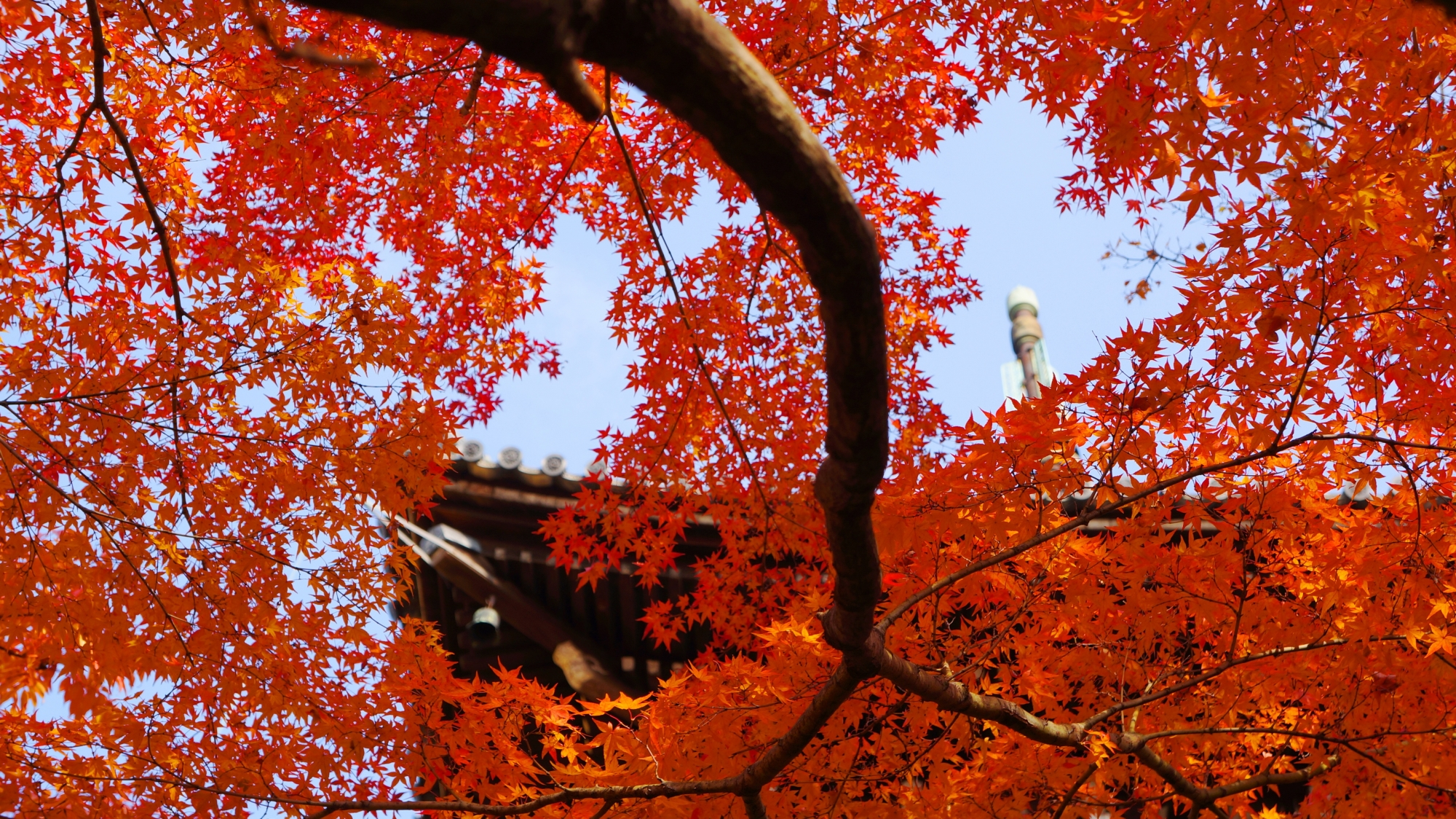 三重塔を煌びやかに彩る楽しい紅葉