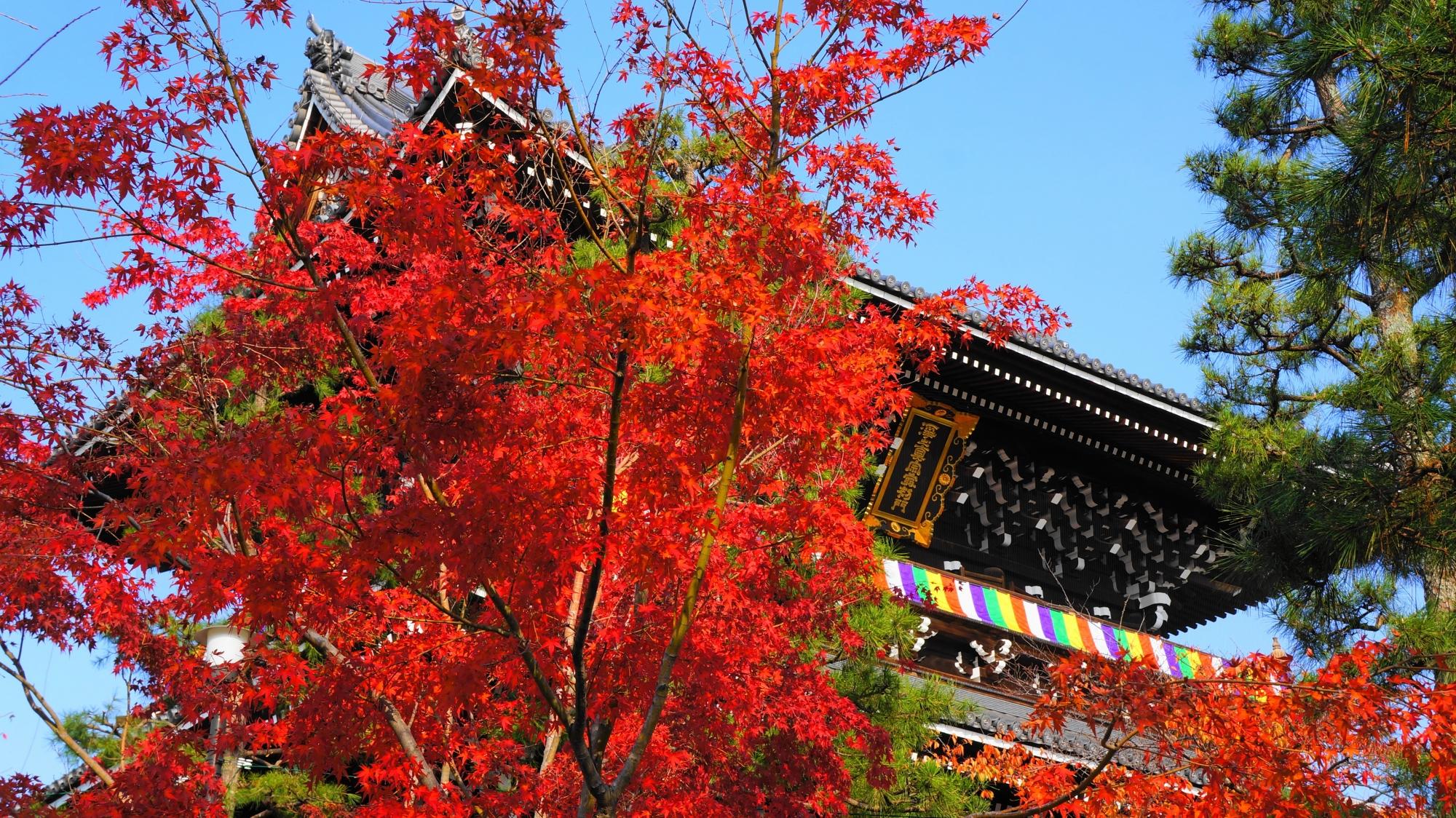 大きな山門を彩る鮮やかな紅葉