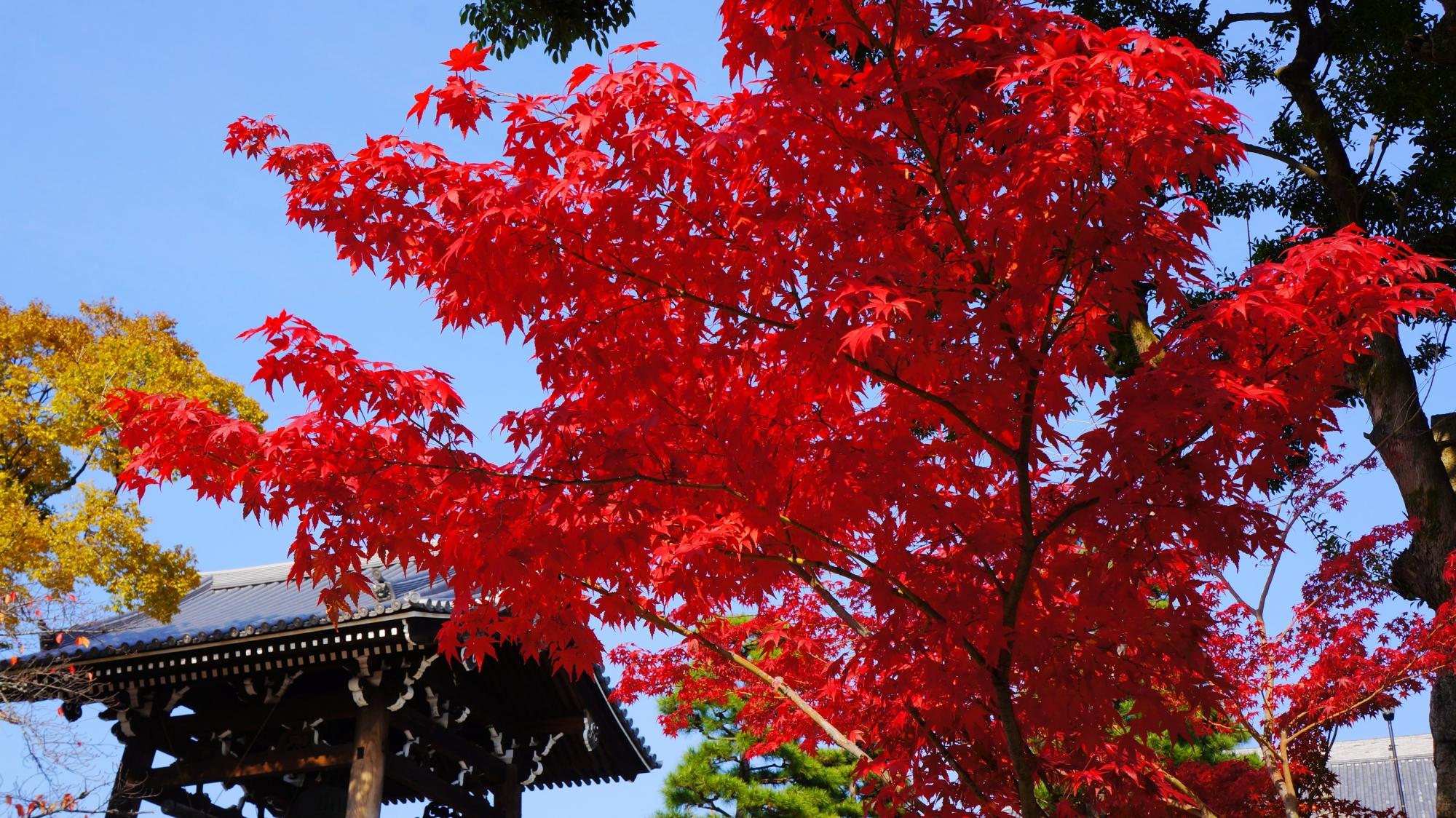 金戒光明寺の鐘楼と紅葉