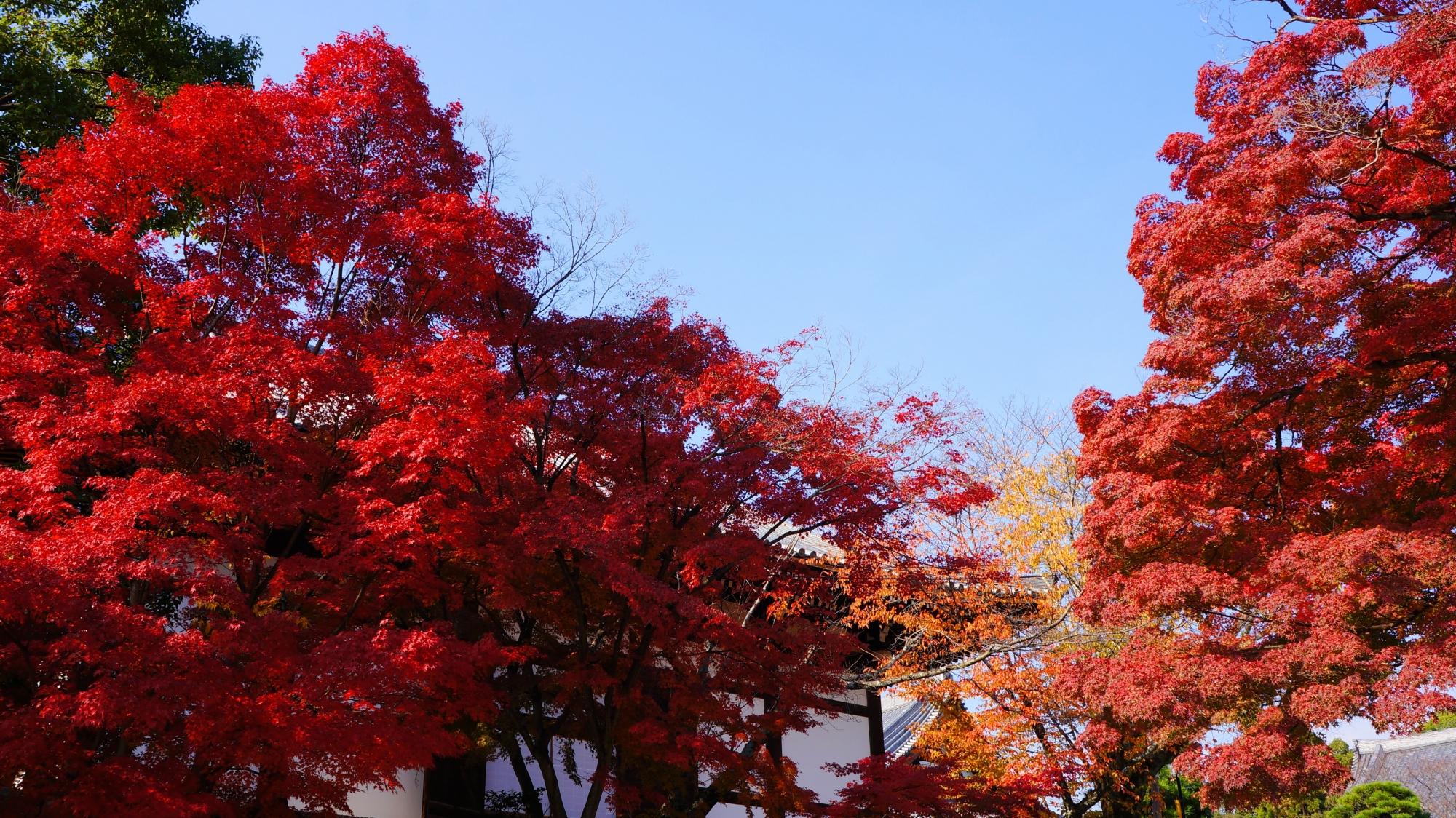 東坂の燃え上がるような豪快な紅葉