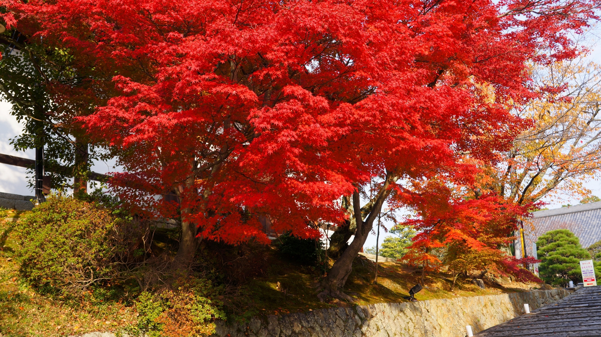 東坂の溢れる真っ赤な紅葉