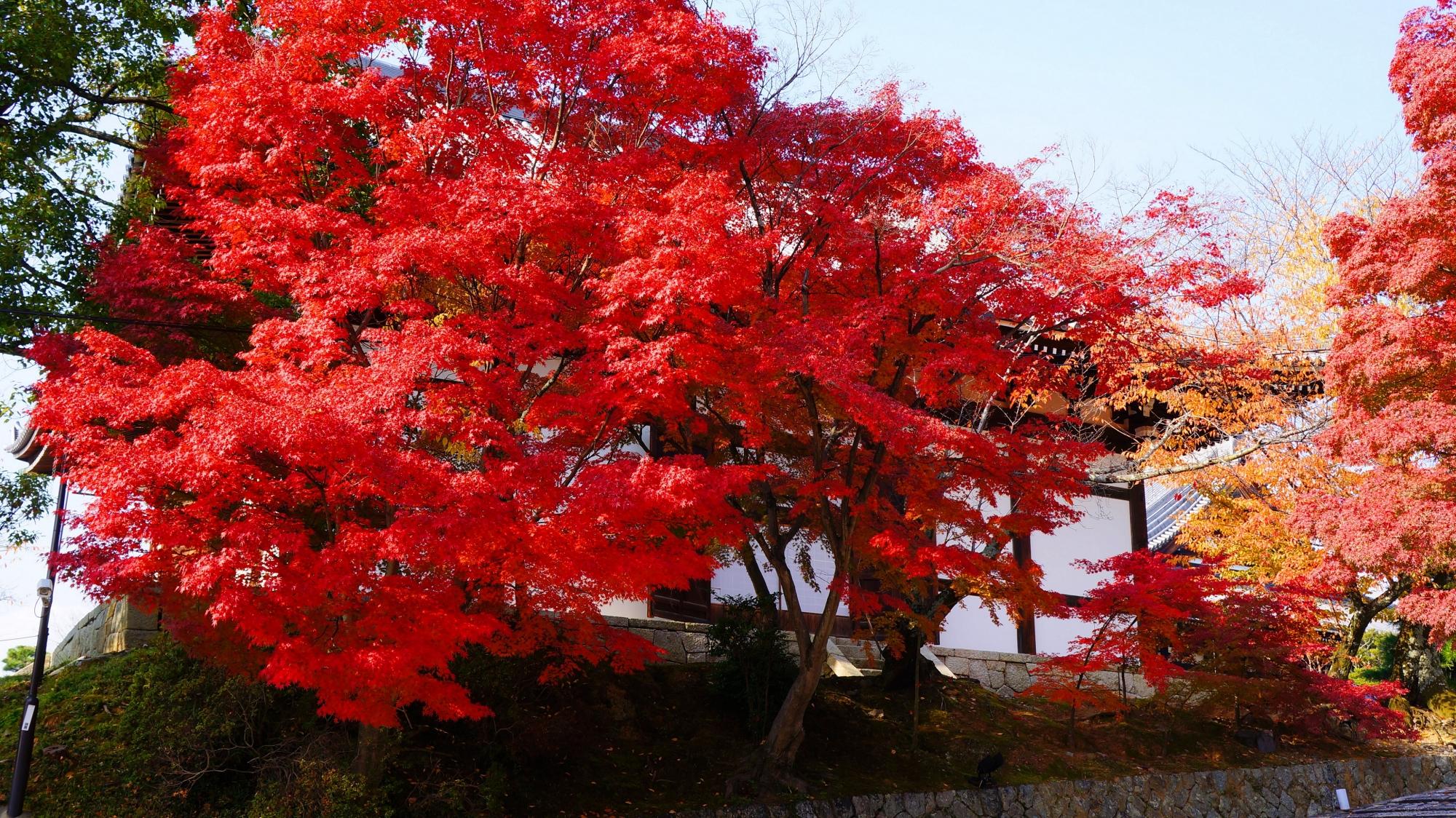 金戒光明寺の東坂の紅葉