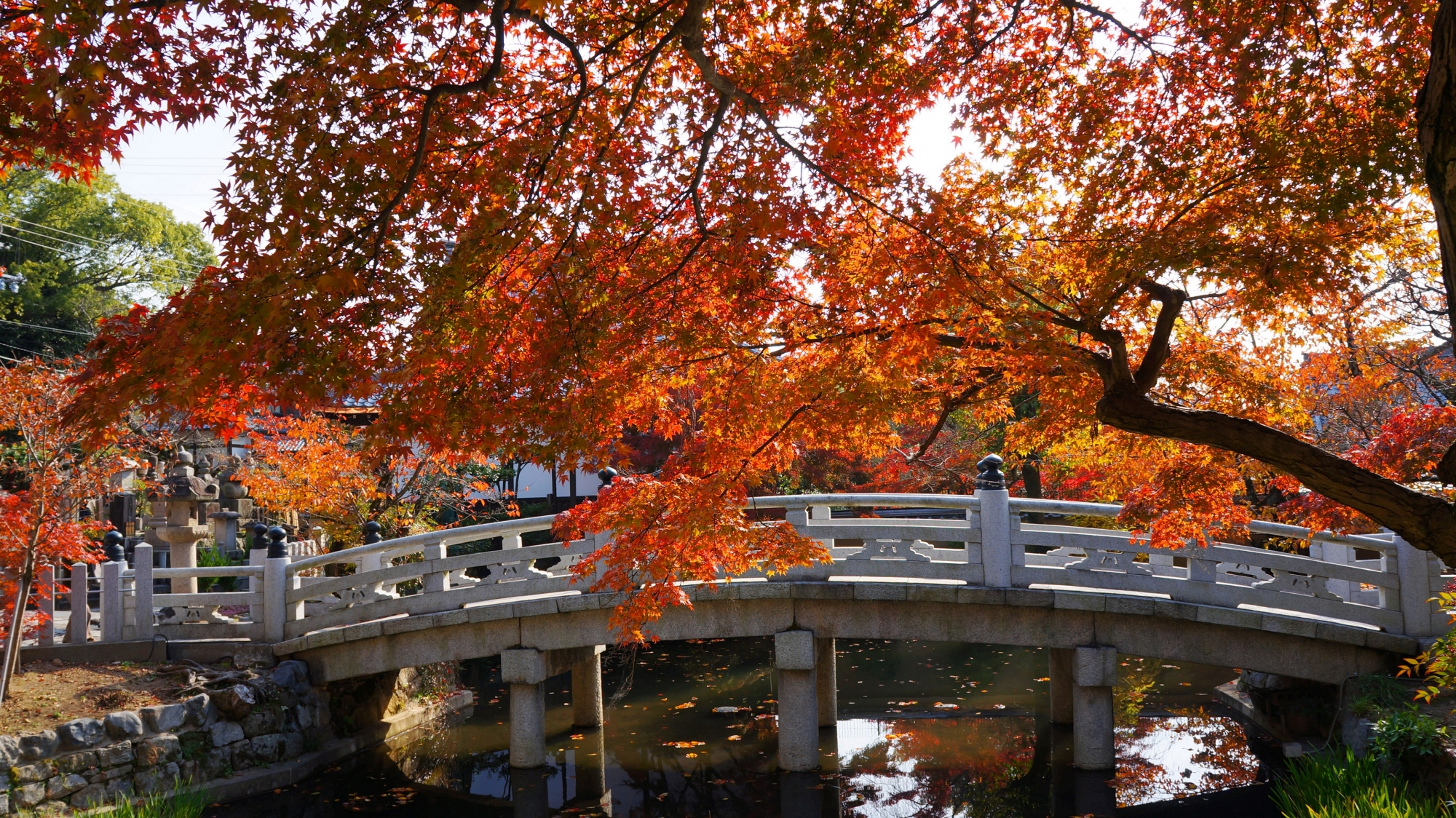 金戒光明寺の蓮池と極楽橋