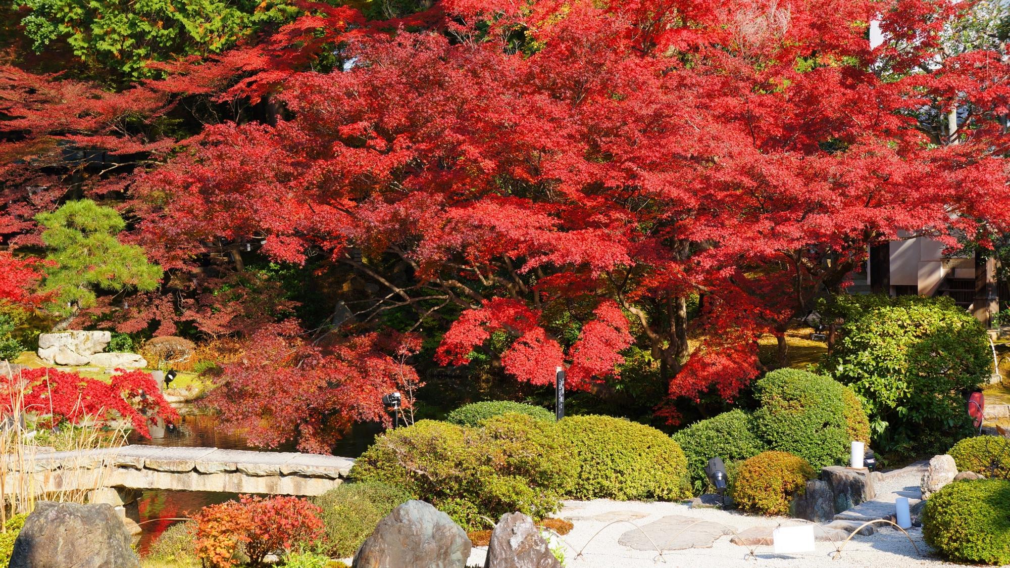 金戒光明寺の方丈北庭の紅葉