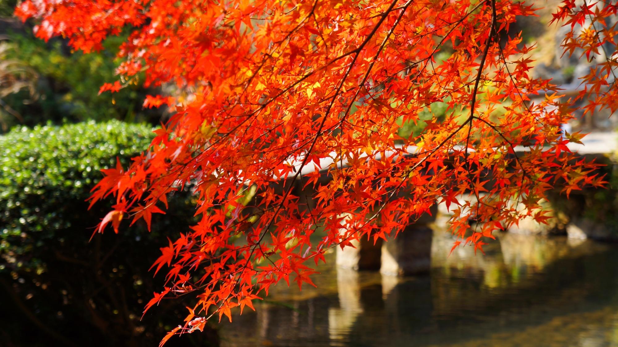 金戒光明寺庭園の石橋を背景にした非常に絵になる紅葉