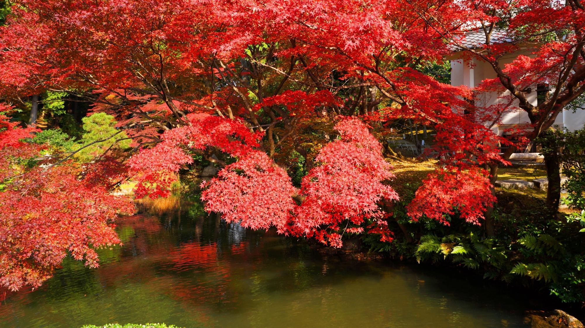 金戒光明寺の水辺を真っ赤に彩る紅葉