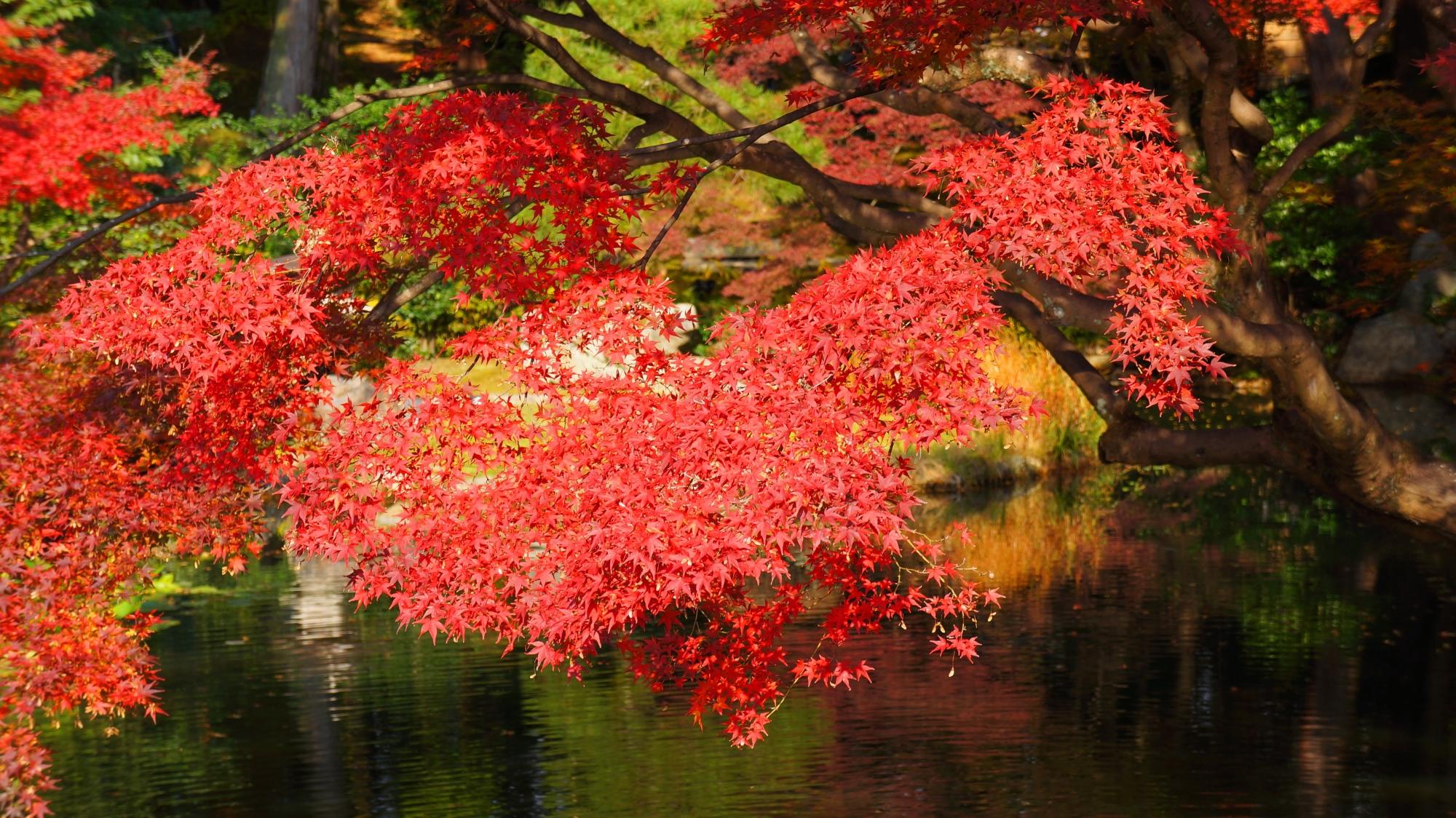 金戒光明寺庭園の紅葉の水鏡