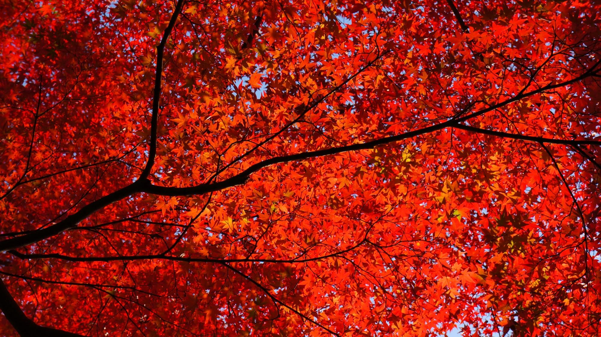 金戒光明寺の素晴らしい紅葉と情景