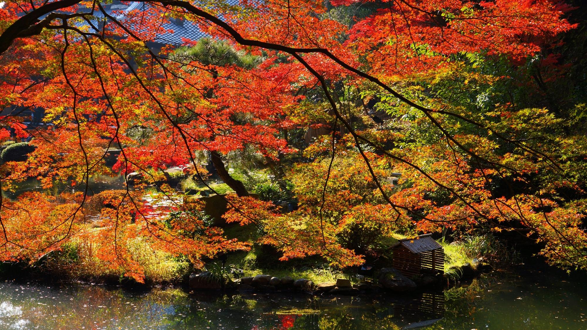 池を覆う華やかで風情も感じられる紅葉