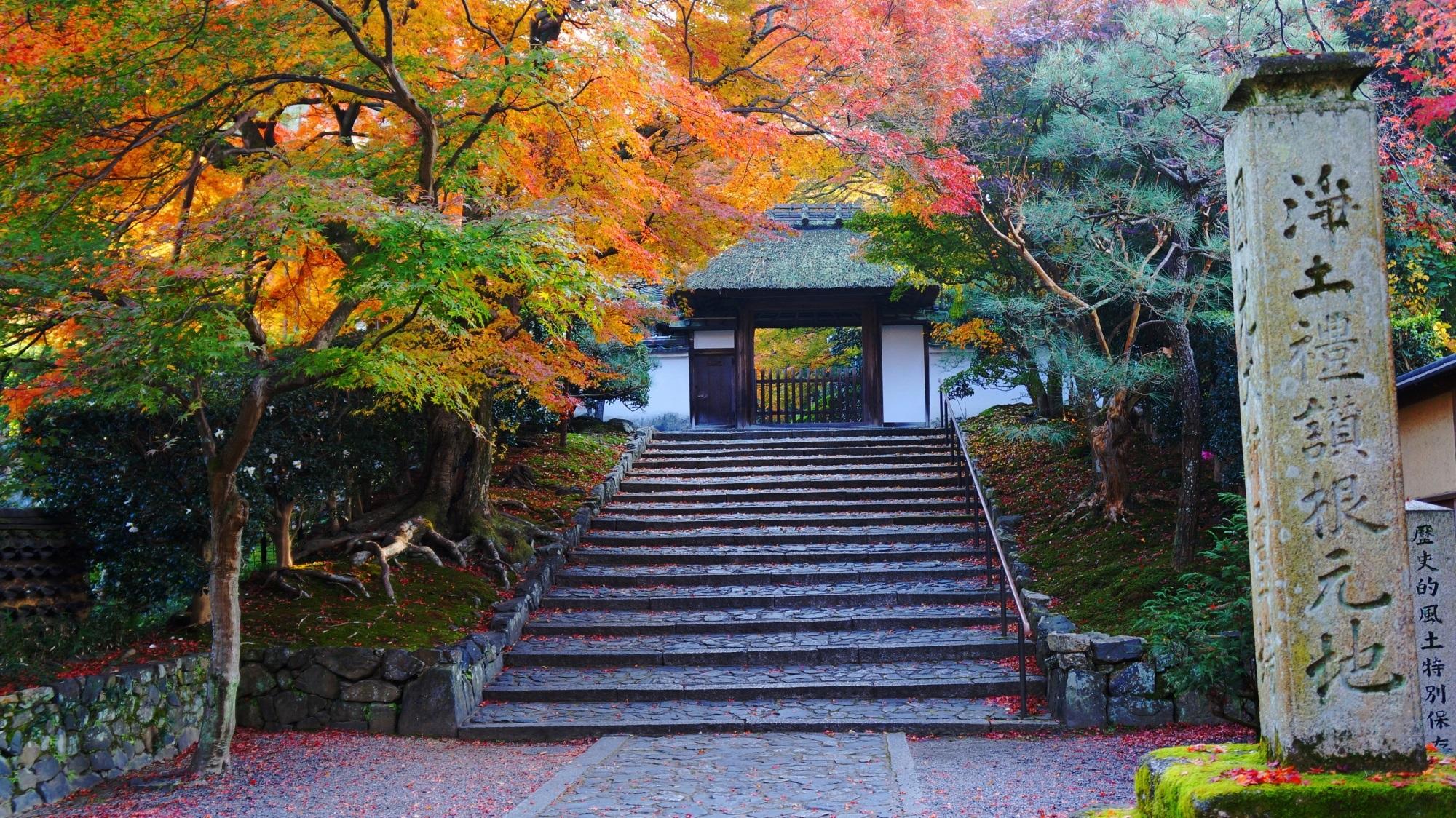 淡い紅葉につつまれた安楽寺の山門