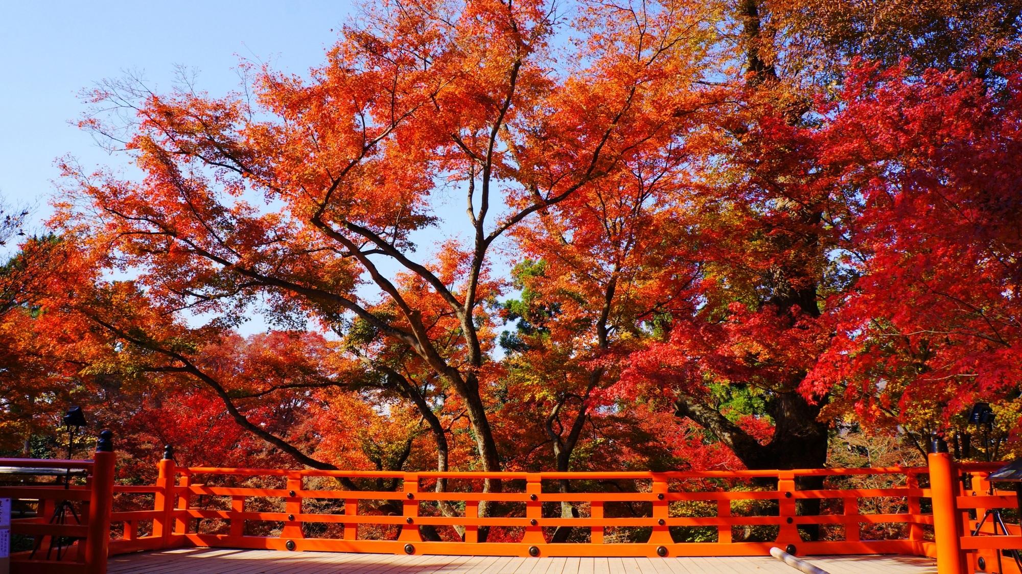 もみじ苑の鮮やかな秋の彩り