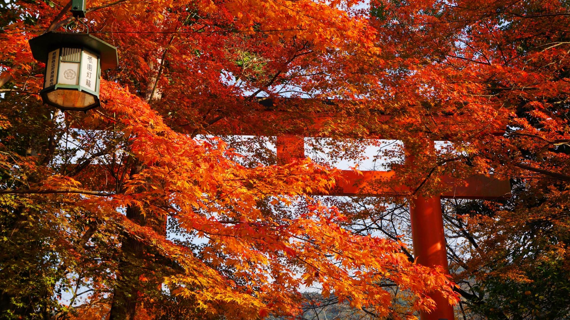 八坂神社 紅葉 意外と知られざる紅葉の名所