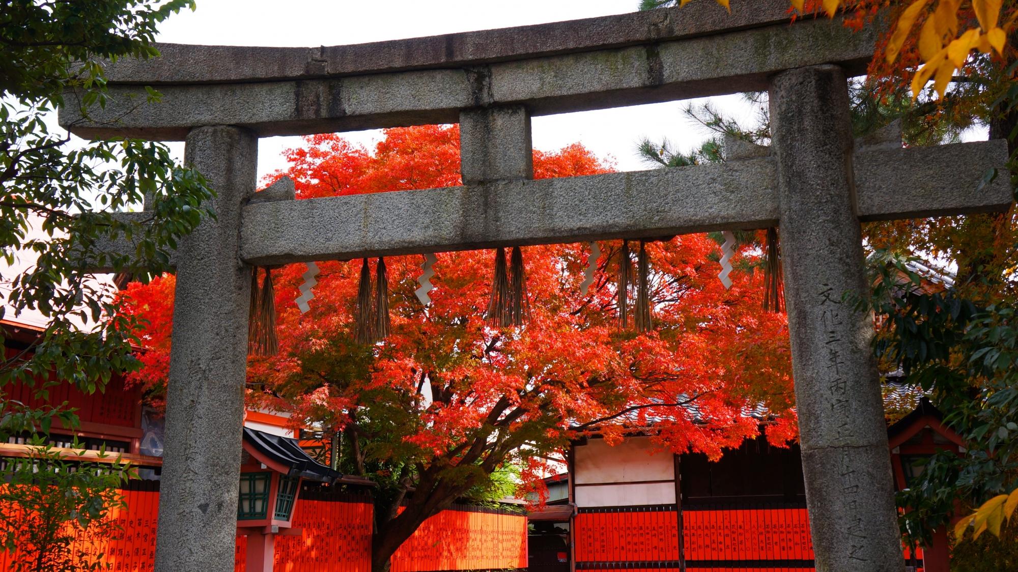 鳥居の向こうで華やぐ鮮やかな赤い紅葉