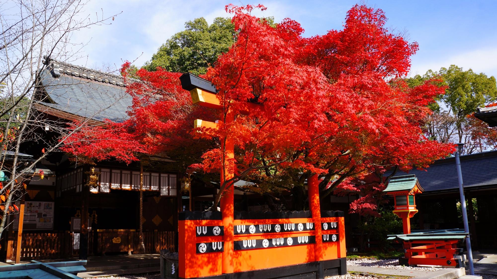 車折神社の超見ごろの真っ赤な紅葉