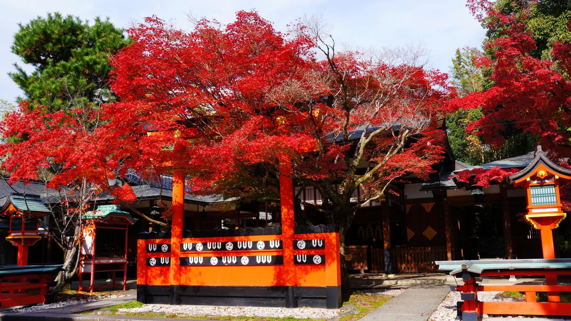 本殿と鳥居を彩る流れるような紅葉