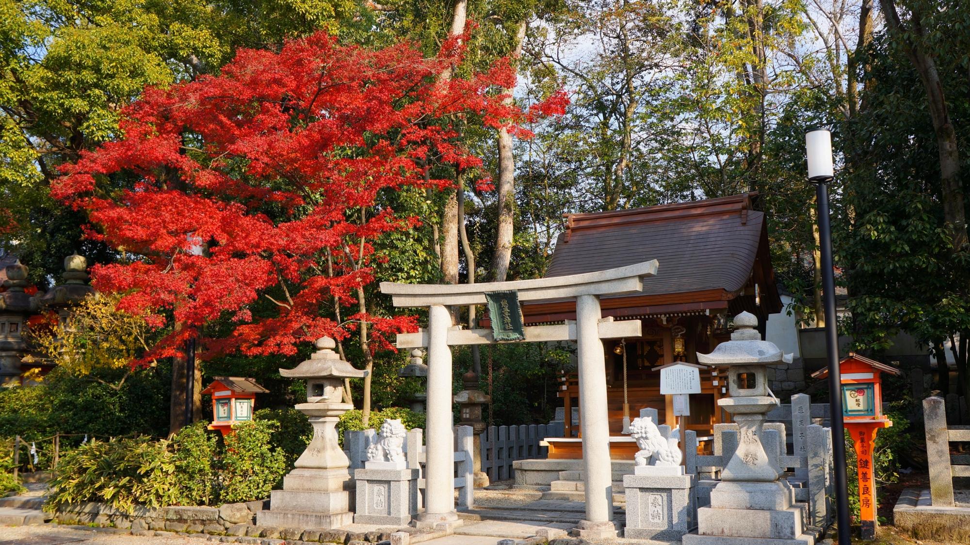 八坂神社の悪王子社と真っ赤な紅葉