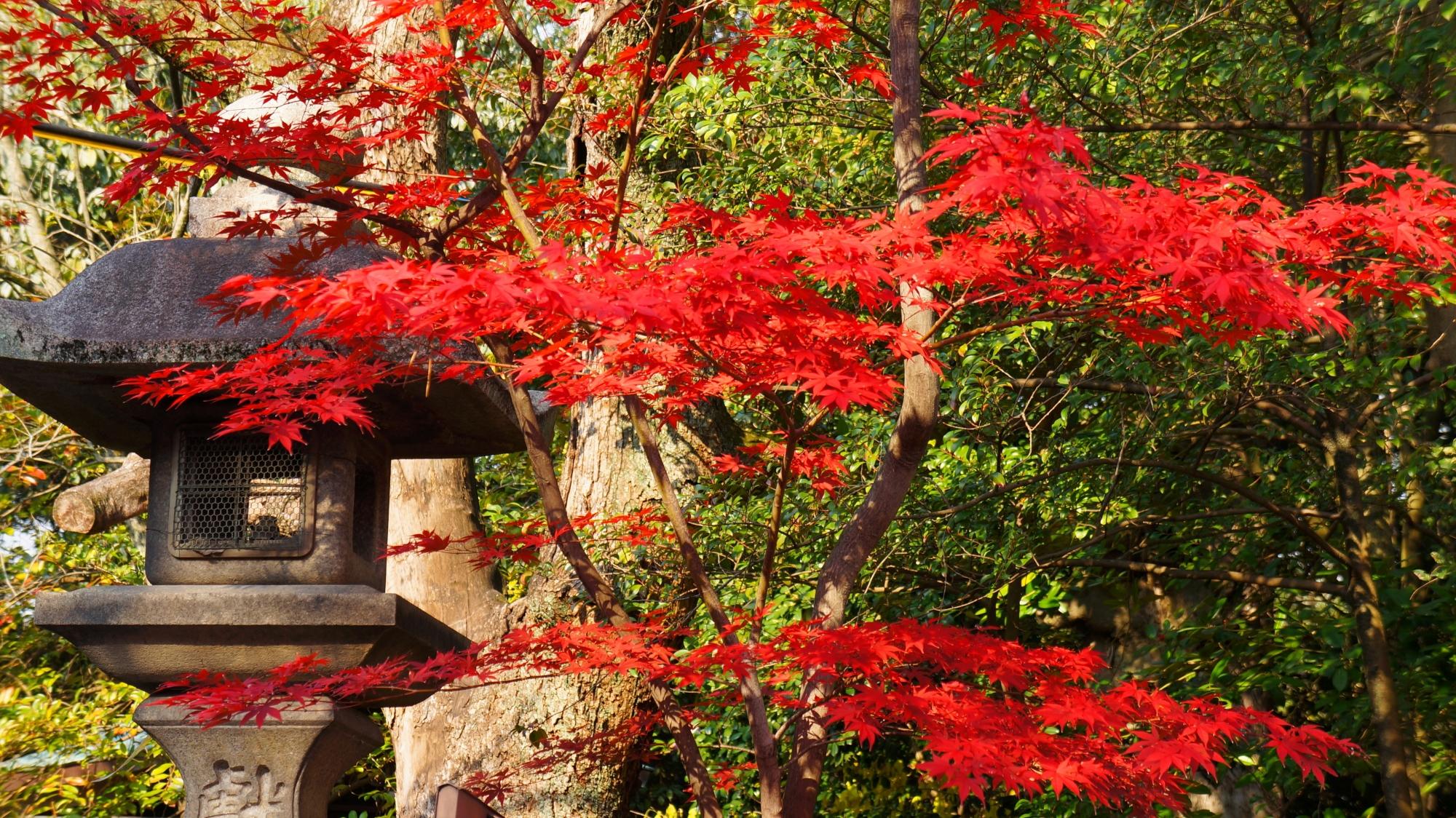 Yasaka-jinja Shrine Kyoto colored leaves