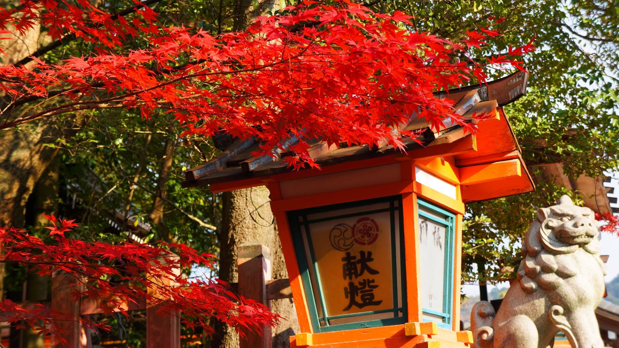 八坂神社の大国主社前の紅葉