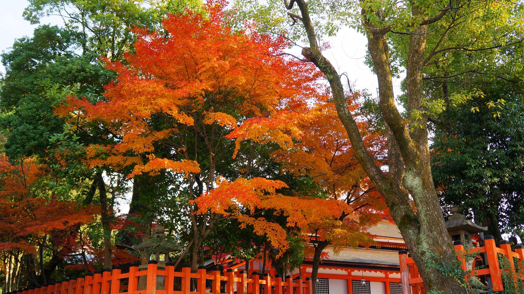 八坂神社の本殿裏の淡い色合いの紅葉