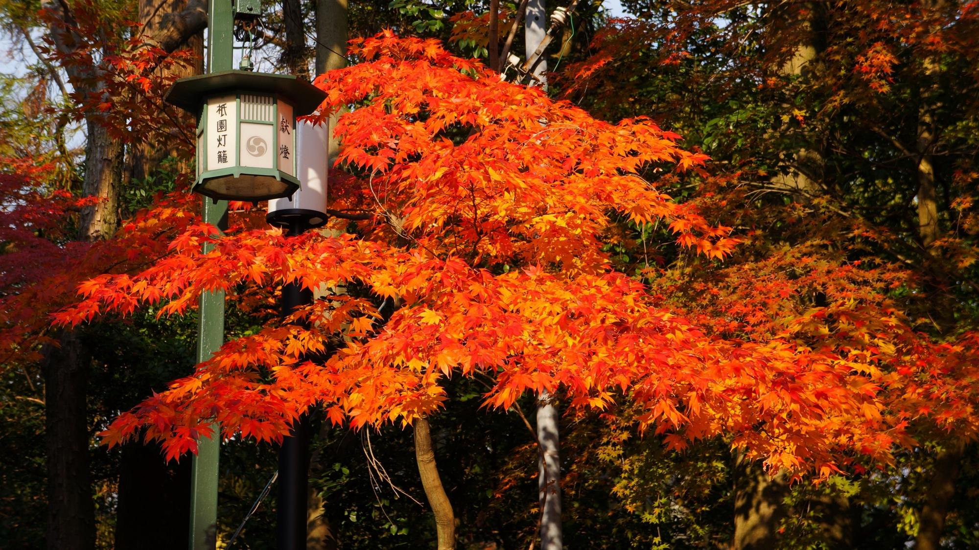 紅葉の意外な隠れた名所の八坂神社