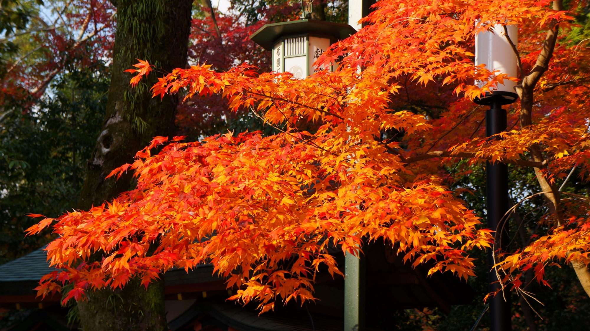 八坂神社の日吉社前の鮮やかな紅葉