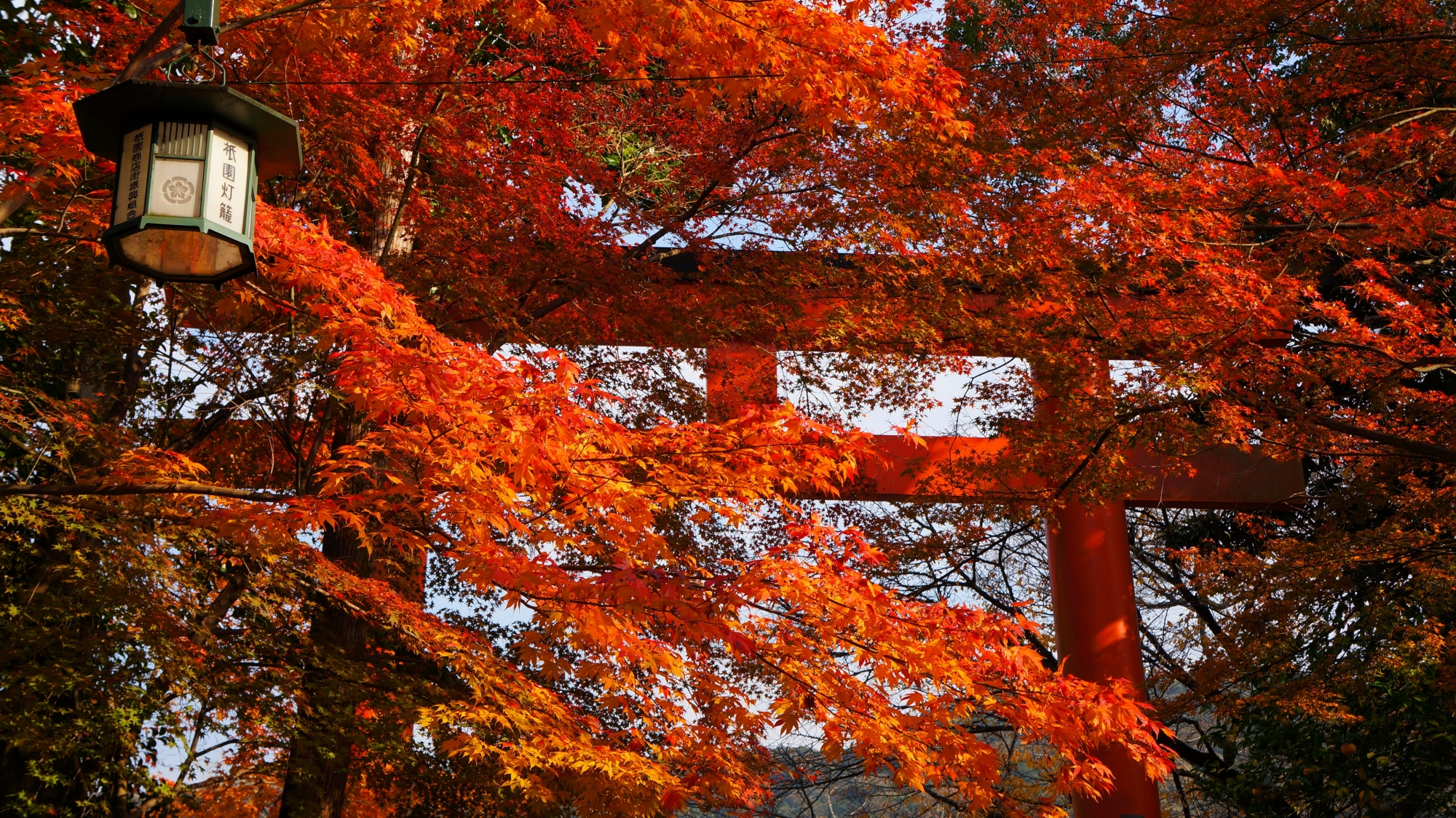 八坂神社の東北門の鳥居と紅葉