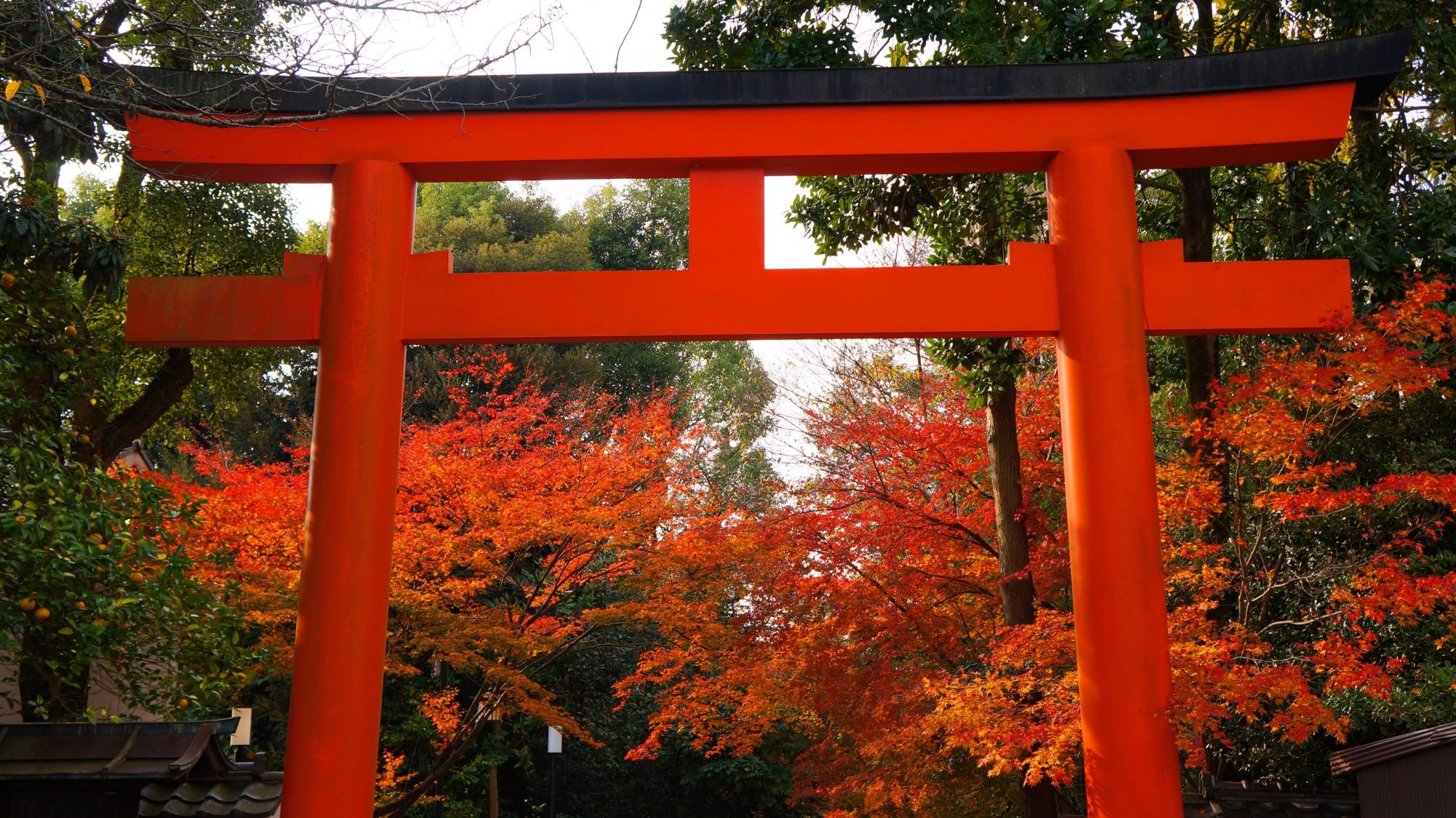 円山公園から眺めた八坂神社の東北門の鳥居ともみじ