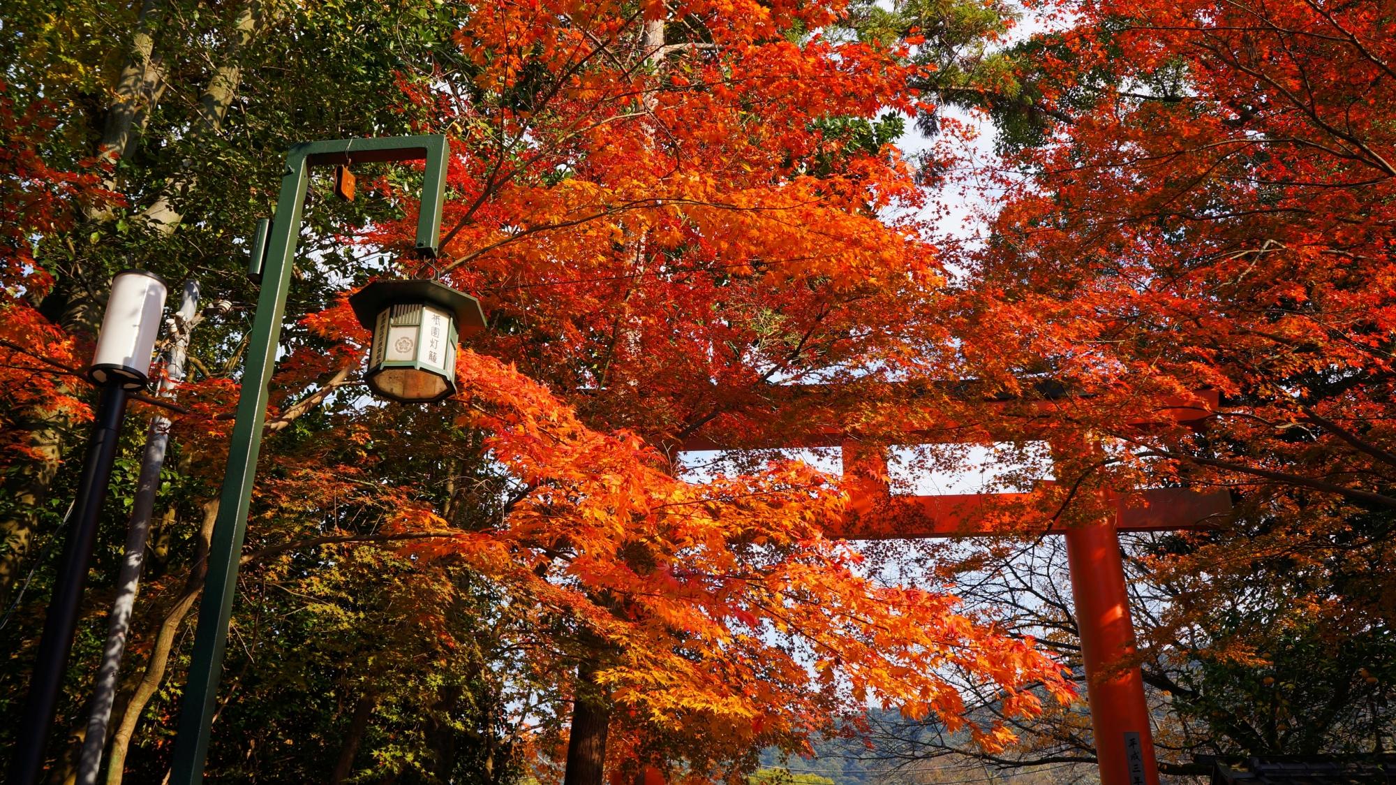 紅葉につつまれた八坂神社の東北門の赤い鳥居と街頭