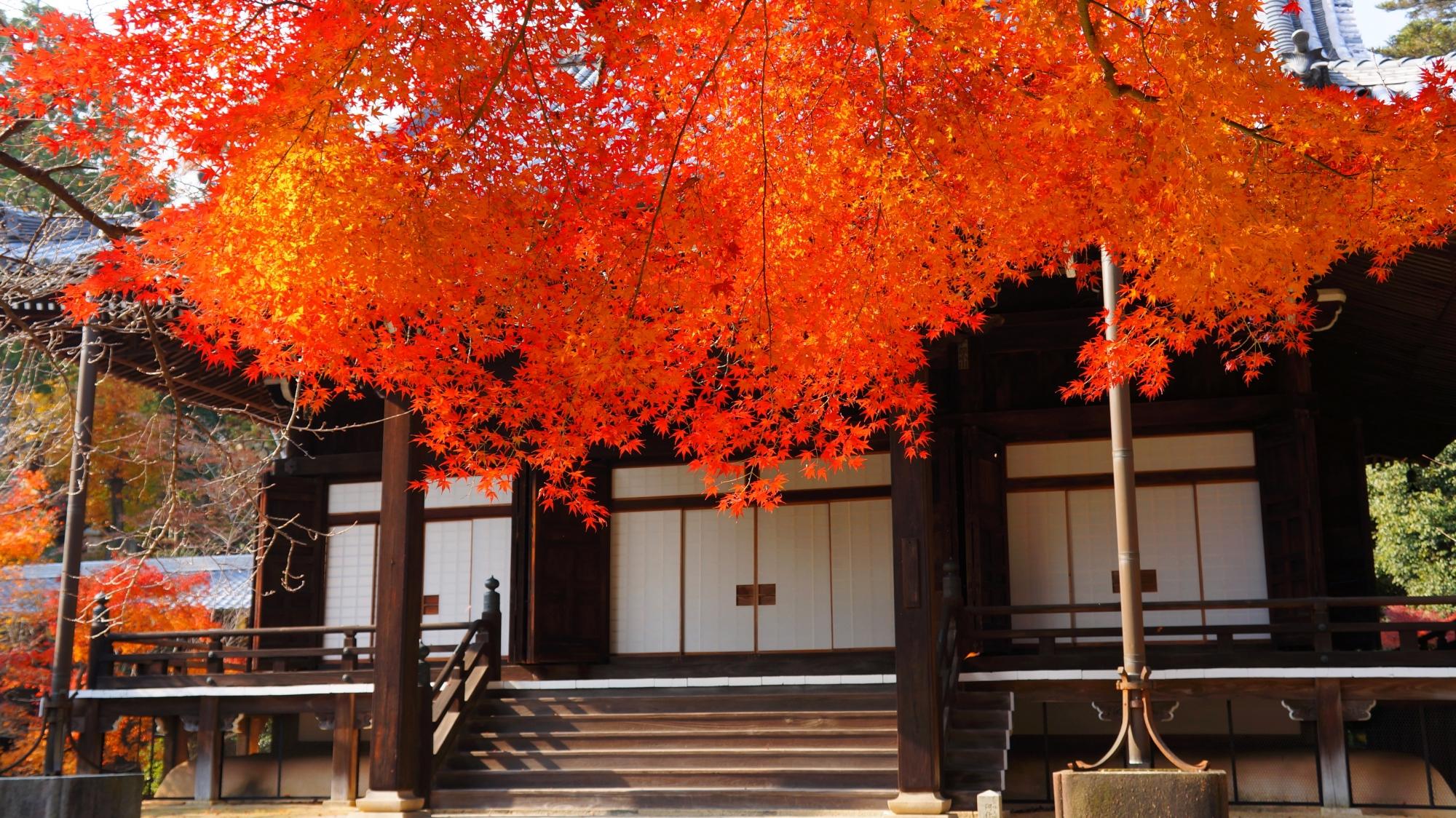 阿弥陀堂と淡く輝くような見事な紅葉