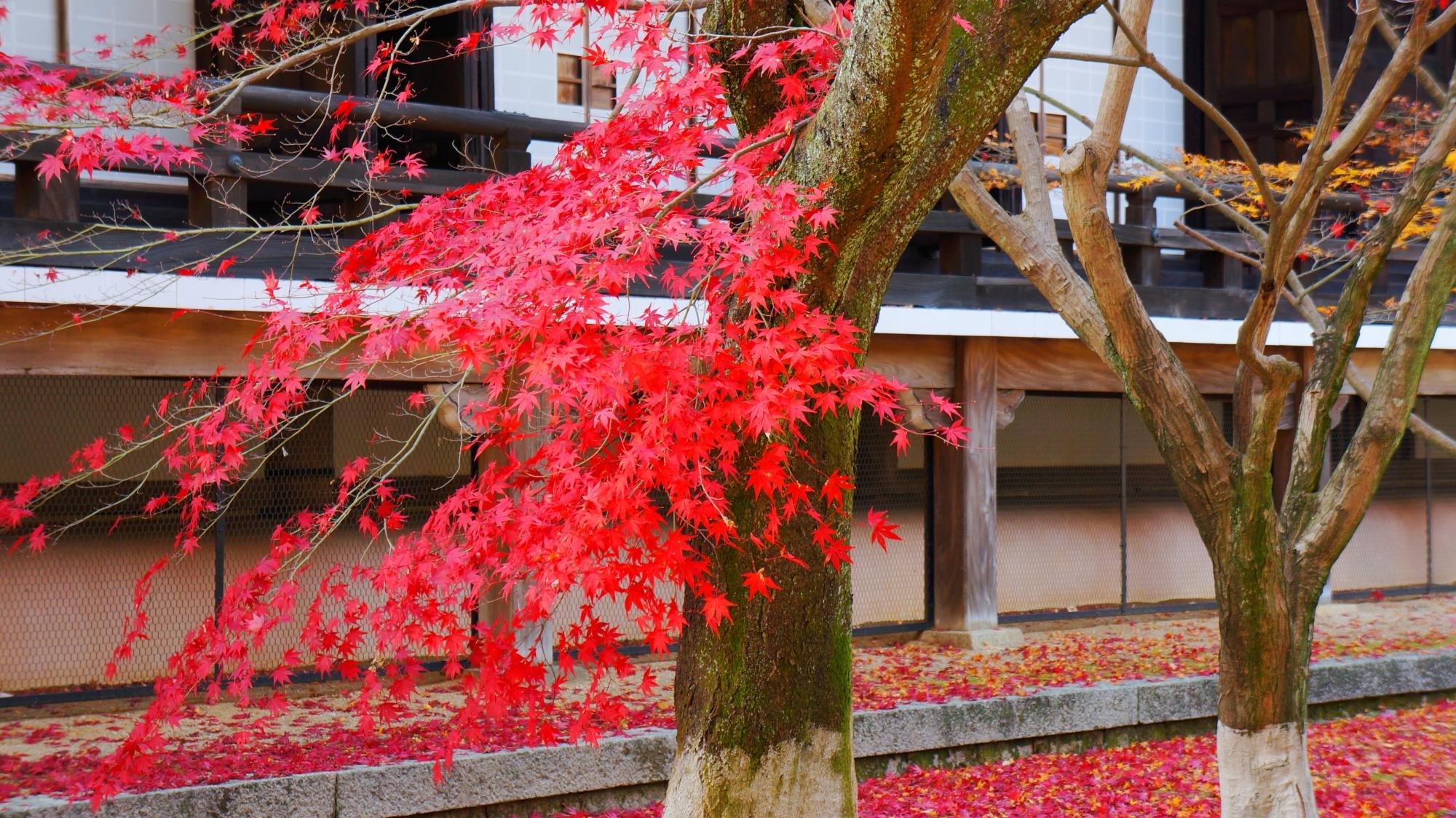 秋風に揺られて散っていく真っ赤な紅葉