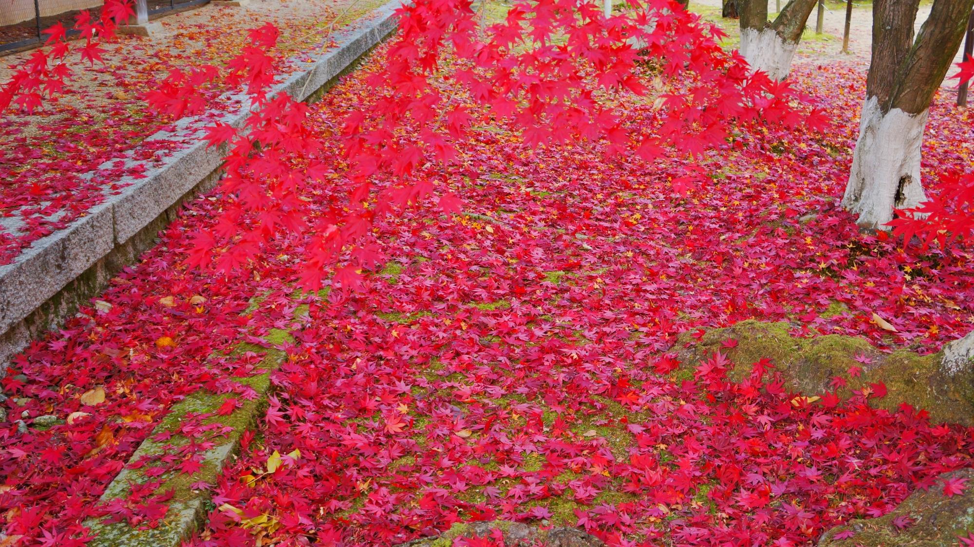 光明寺の広がる紅葉の絨毯