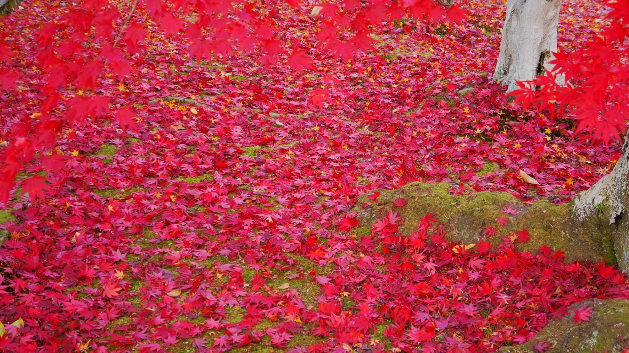 真っ赤に彩られた御影堂周辺