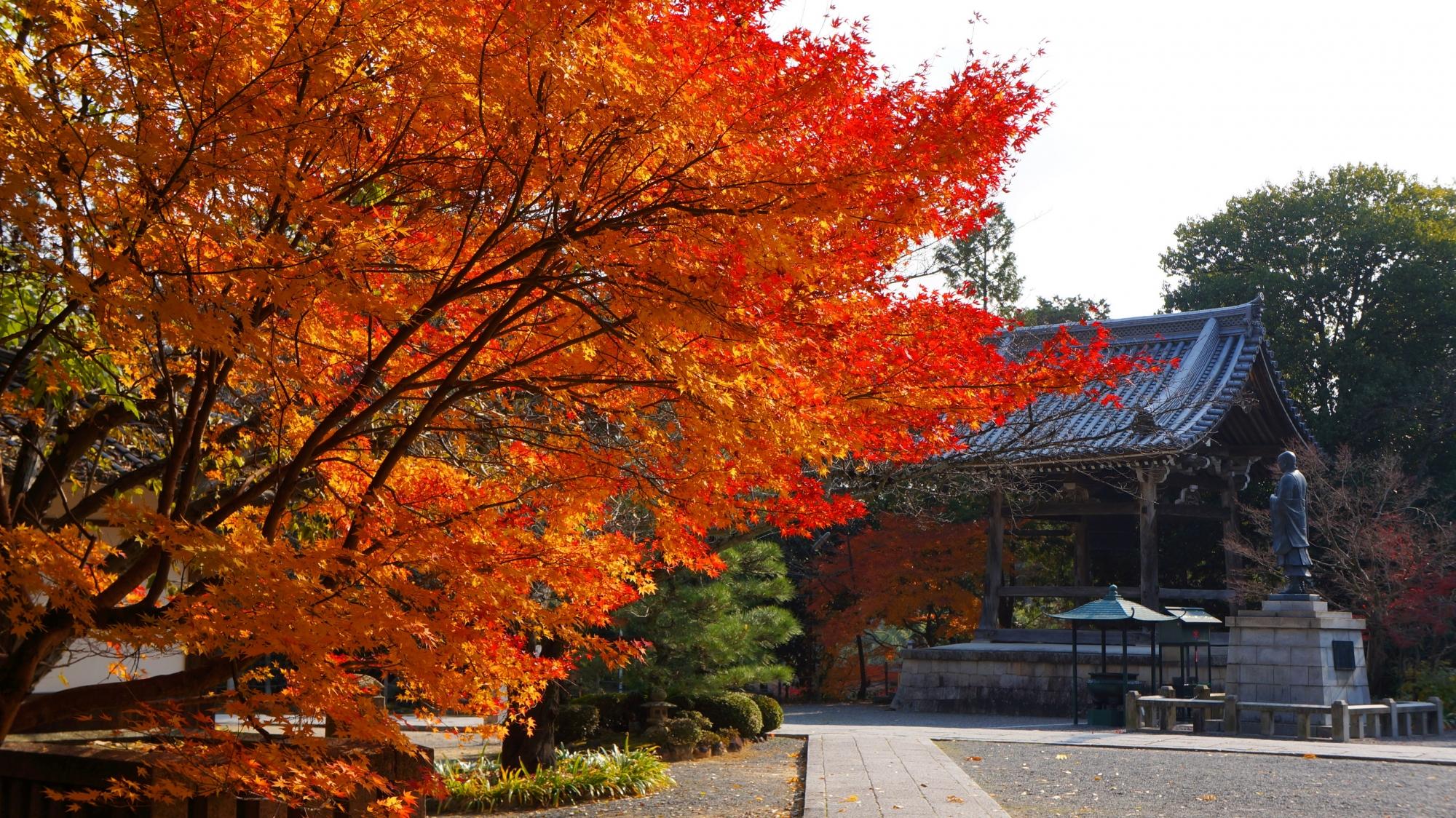 光明寺の鐘楼と法然上人像を彩る紅葉