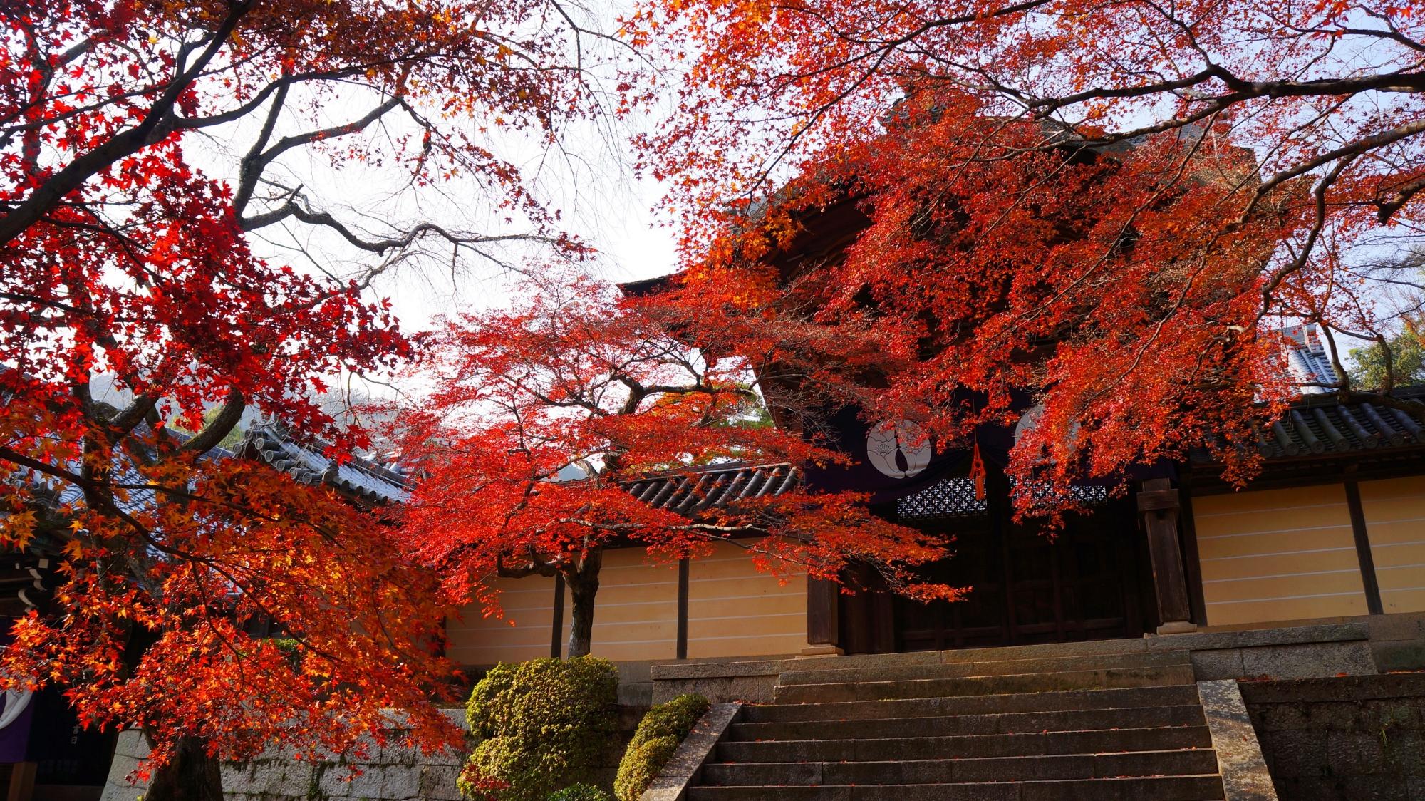 何本もの木や枝から優雅に溢れる赤い紅葉