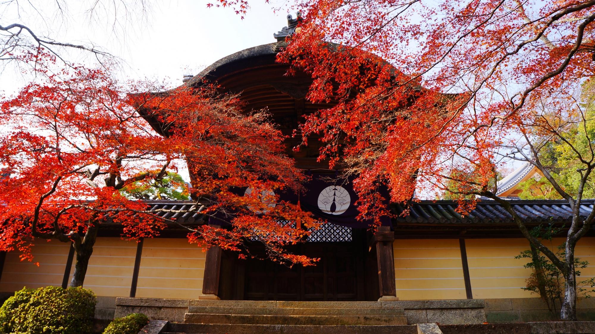光明寺の勅使門と鮮やかで繊細な紅葉