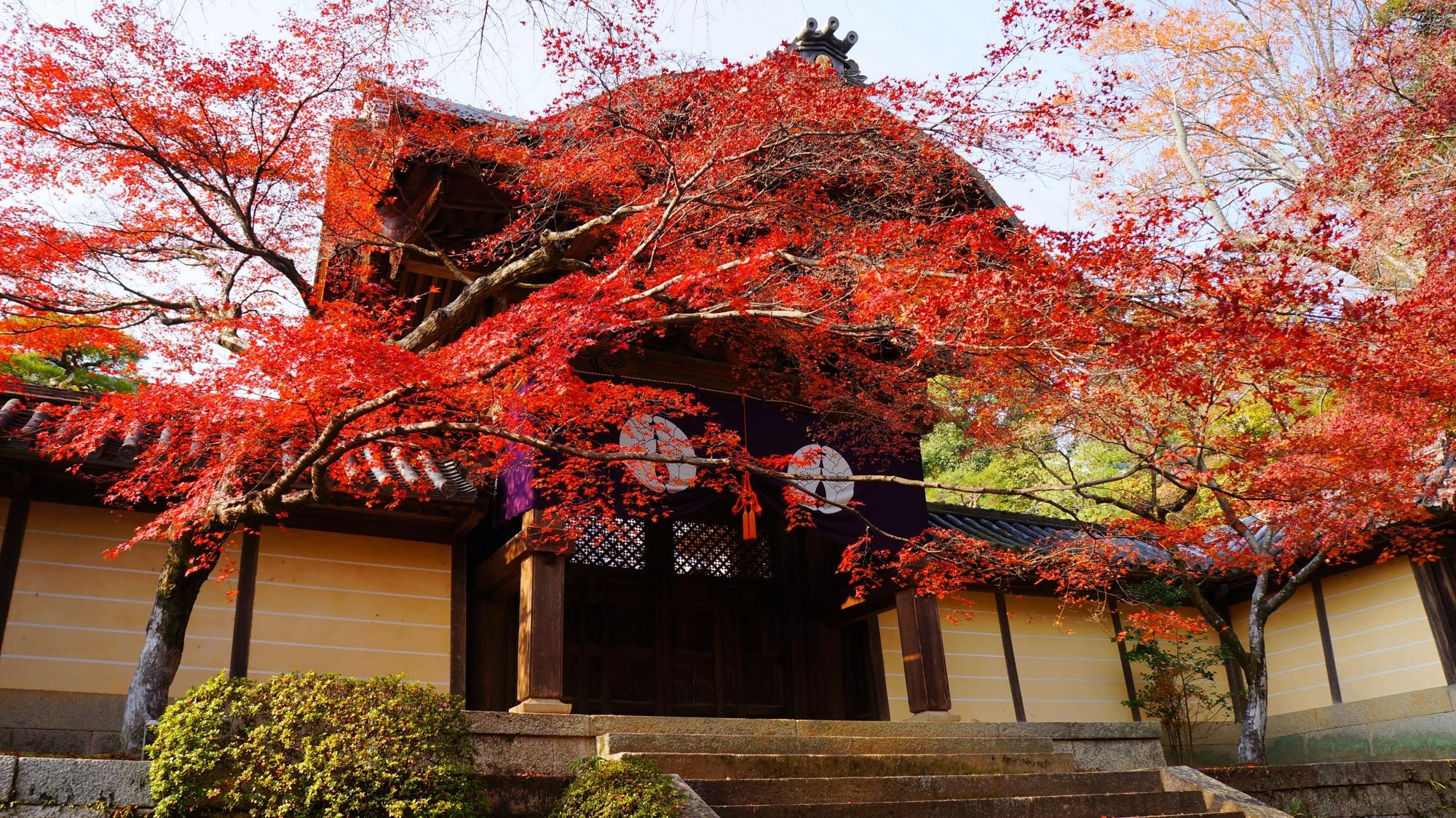 見事な秋色の空間に凛として佇む勅使門