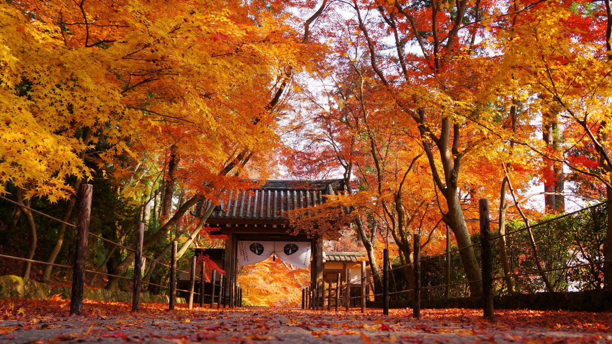 薬医門を彩る秋色の散り紅葉