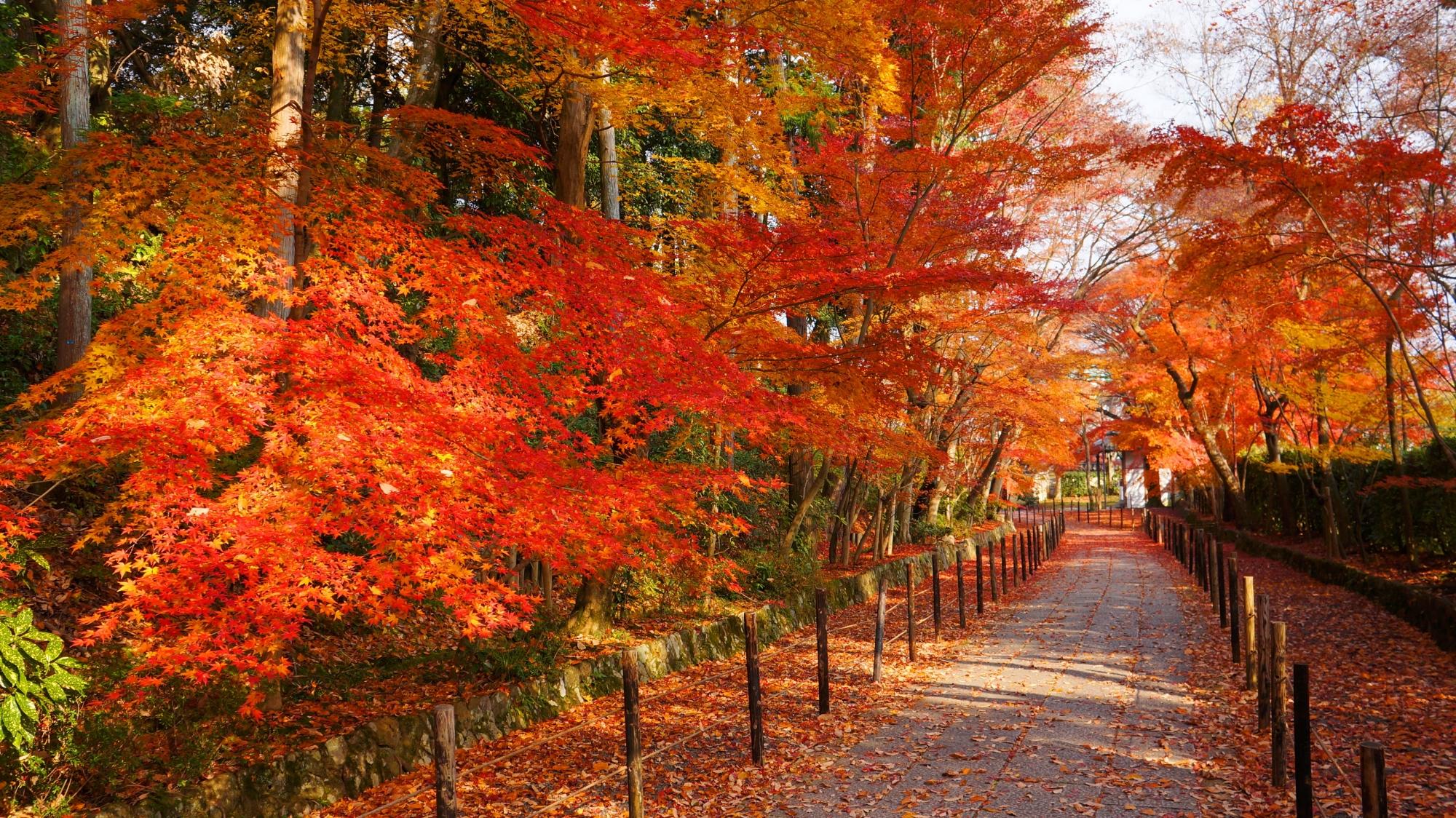 石畳の風情ある参道を彩る煌く紅葉