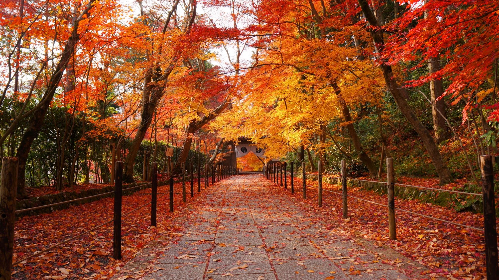 深く鮮やかな彩りにつつまれた紅葉の参道と薬医門