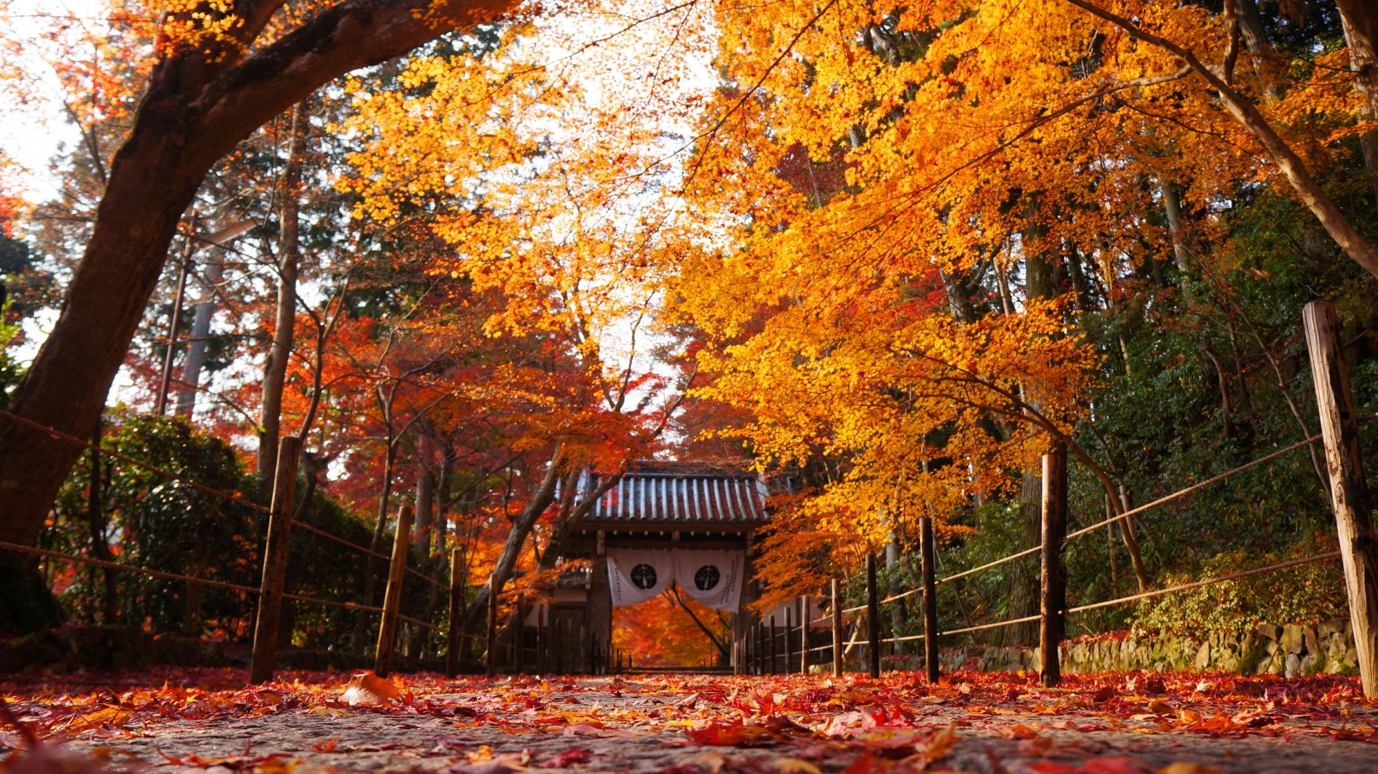 極上の紅葉にそまった晩秋の光明寺