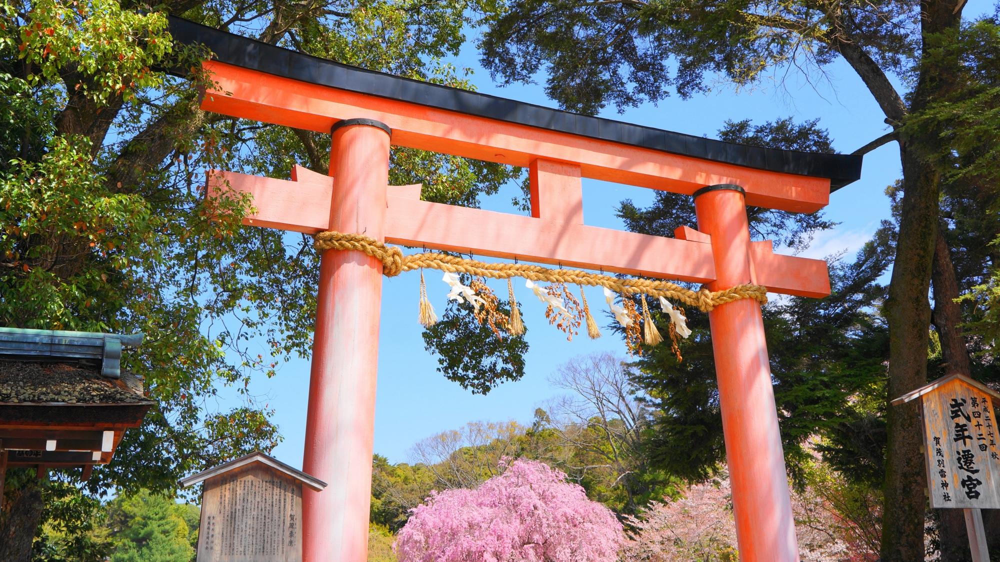 奥に斎王桜が見える上賀茂神社の一ノ鳥居