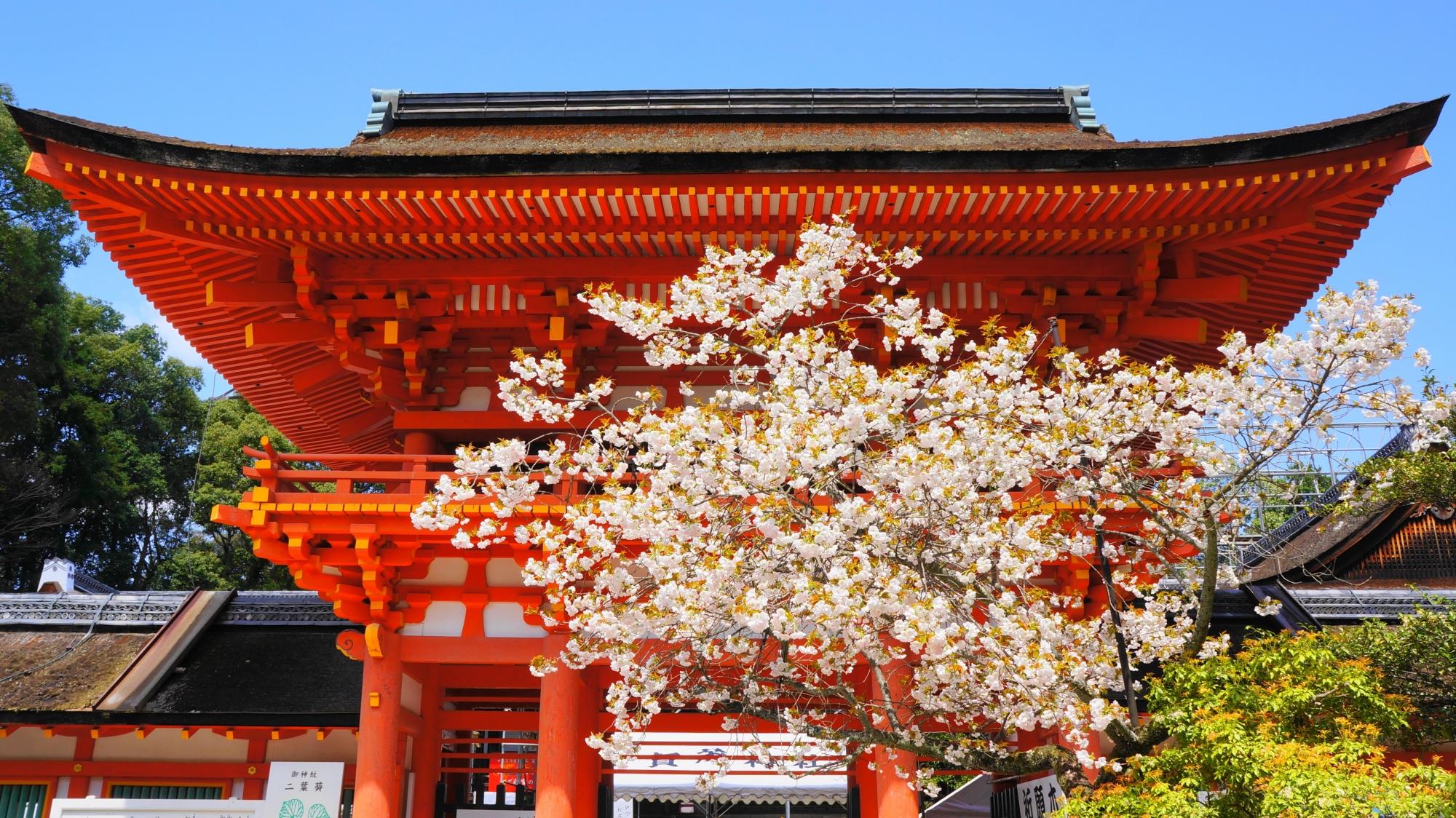 楼門と賀茂桜