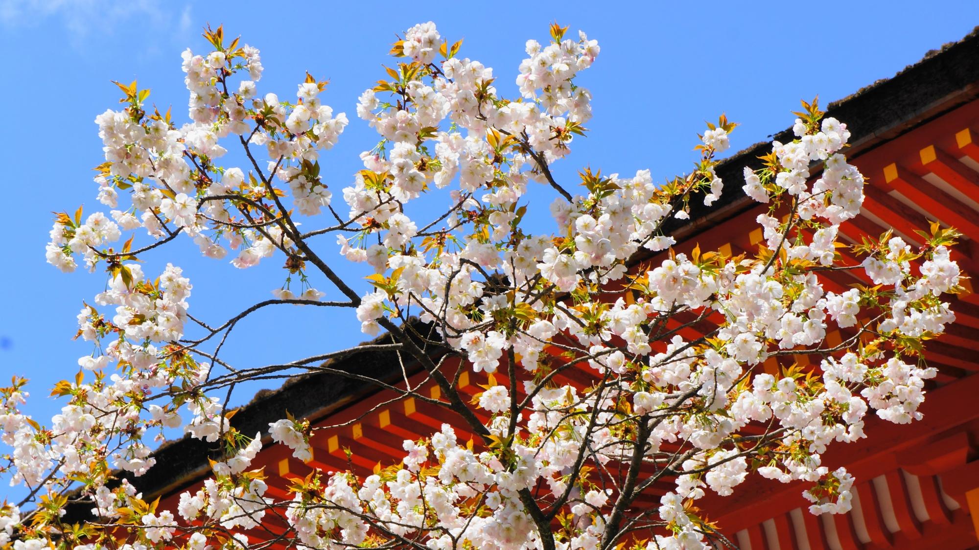 上賀茂神社の赤と青と白の綺麗なコントラスト