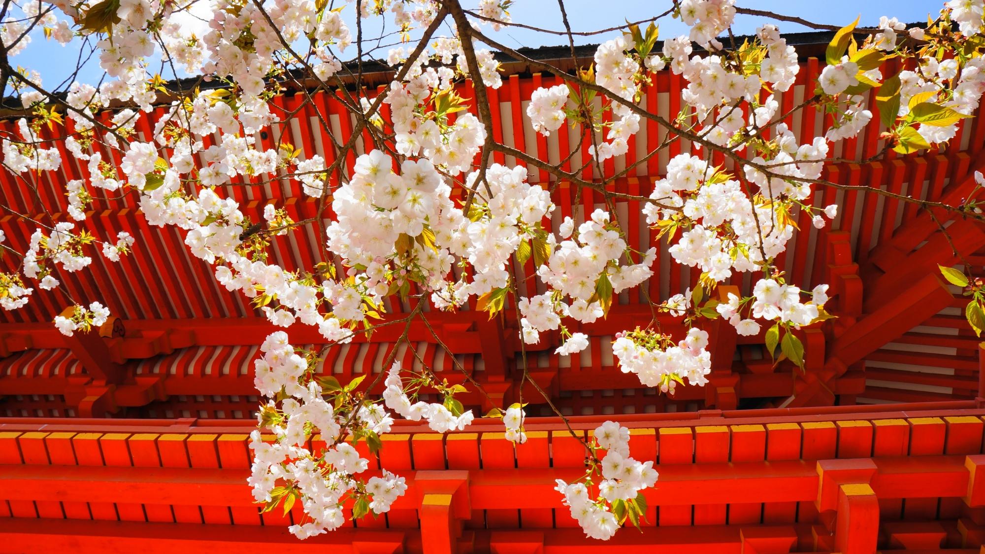 長閑な春色に染まる上賀茂神社の楼門